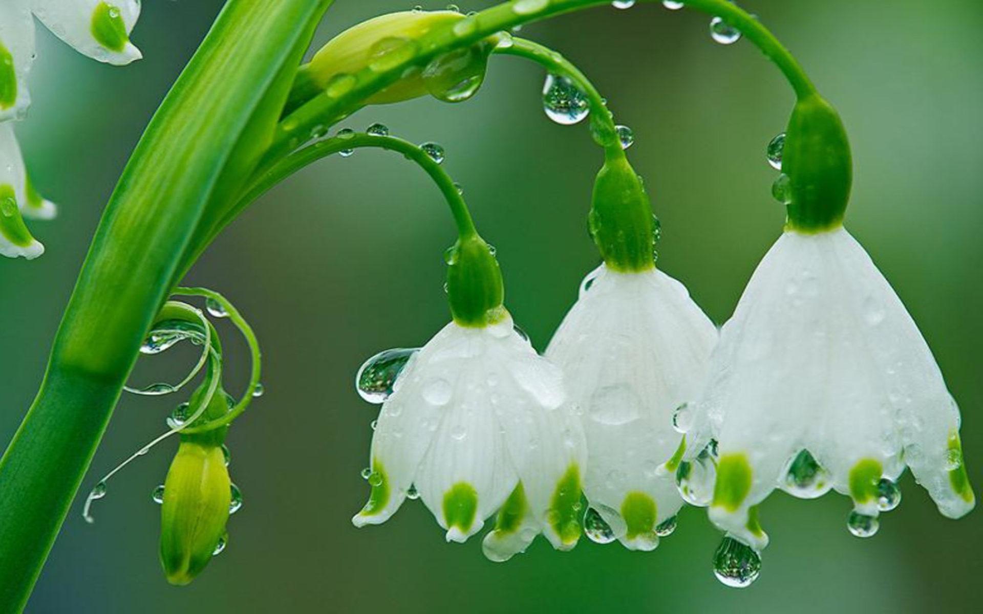 Paint Falling Wallpaper Spring Flowers Drops Of Rain Hd Wallpaper Wallpapers13 Com
