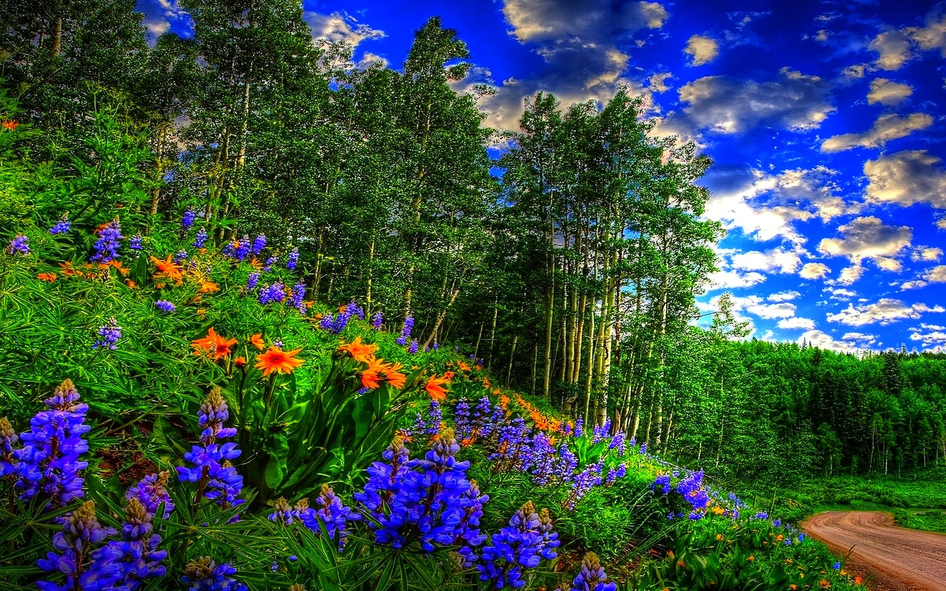 Fall Hd Wallpaper 1280x1024 Spring Forest Sky Clouds Flowers Forest Road Wallpaper