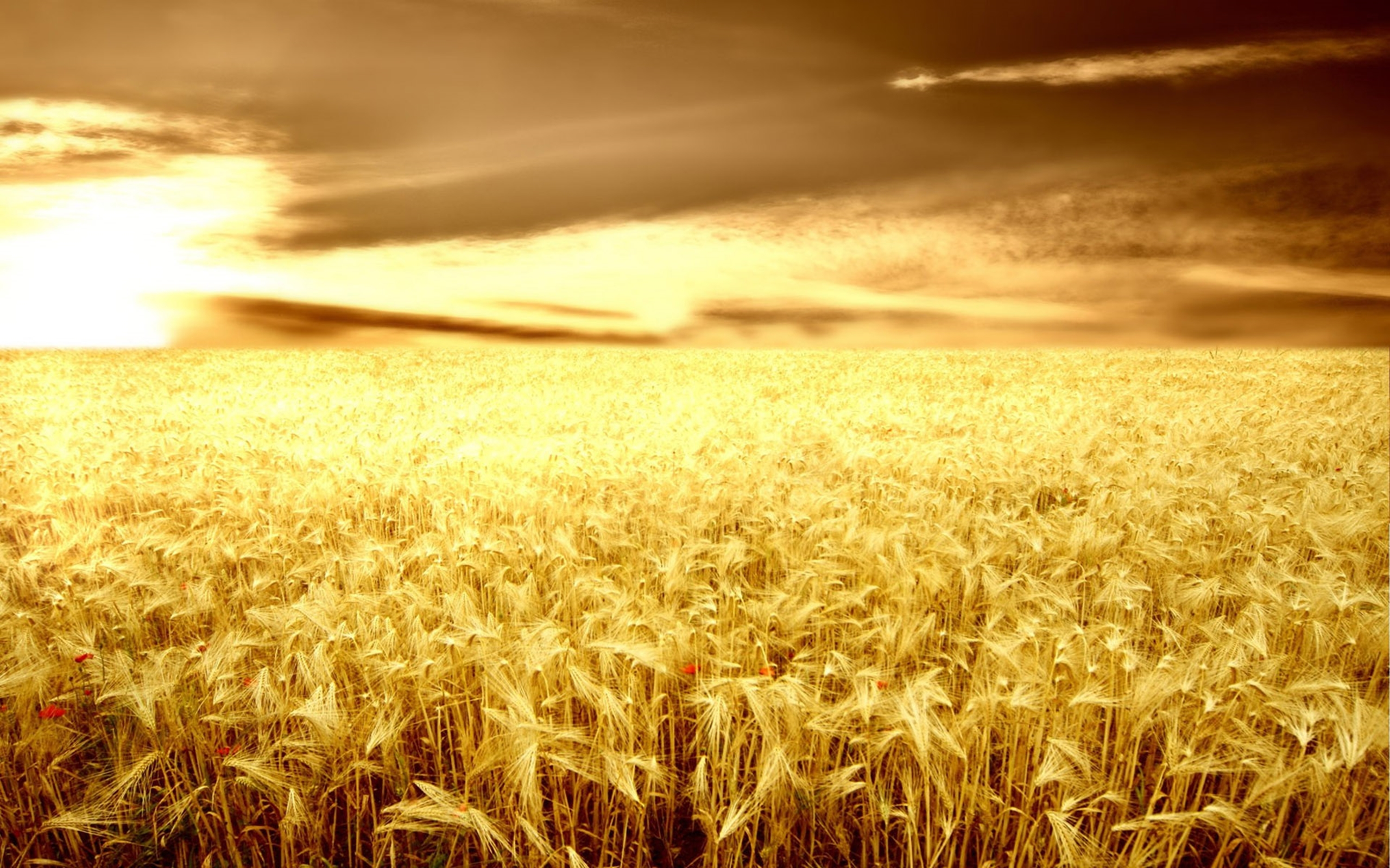 Inspirational Wallpapers With Quotes High Resolution Sunset Over The Wheat Field Wallpaper Nature Wallpaper