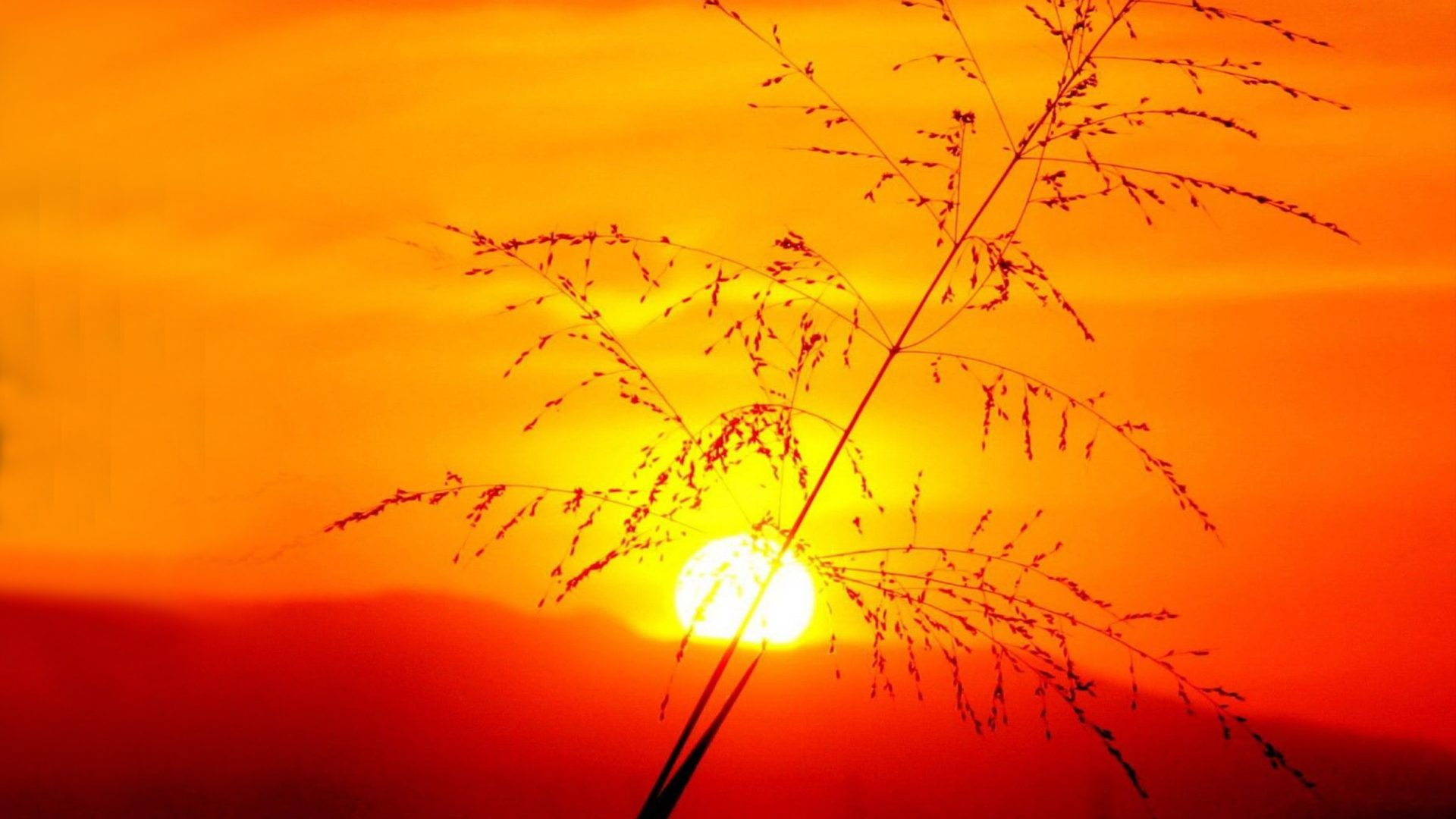 Download Hd Good Morning Wallpaper Sunset Yellow Sun Dry Grass Red Sky Wallpapers13 Com