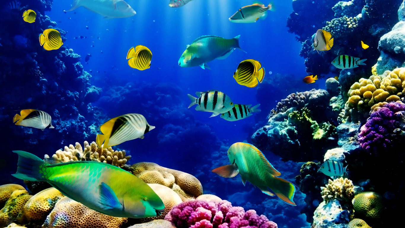Fish Tank 3d Live Wallpaper For Pc Fish Ocean Seabed Tropical Reef Coral Hd Wallpaper