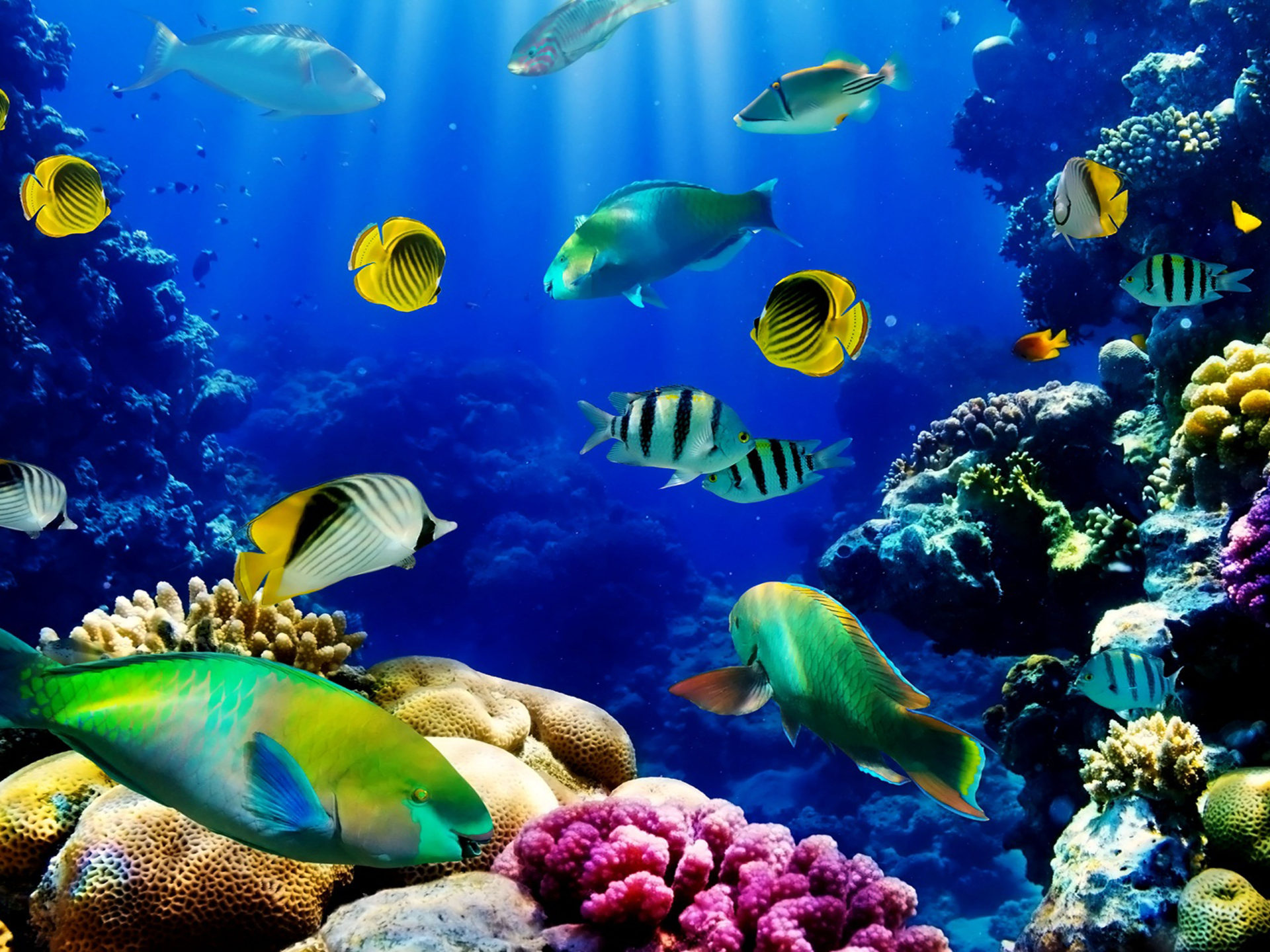Hd Fish Live Wallpaper For Pc Fish Ocean Seabed Tropical Reef Coral Hd Wallpaper
