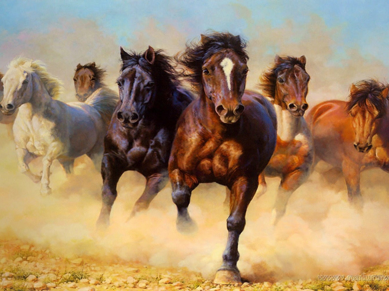Animal Desktop Wallpaper Animals Wild Horses Galloping Hd Wallpaper 3840x2400