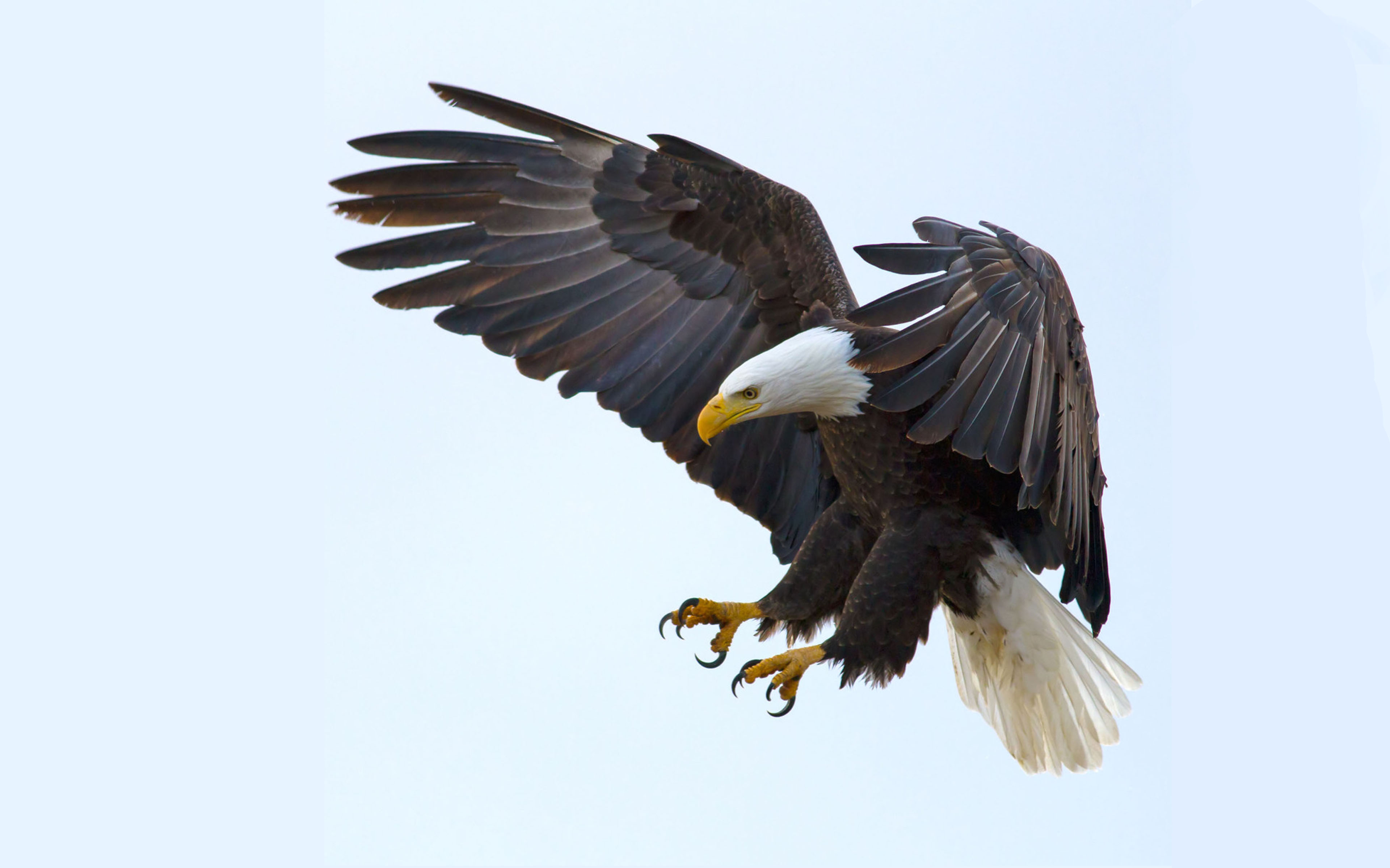 Native American Wallpaper Iphone Bald Eagle Wallpaper For Your Cell Phone And Laptop