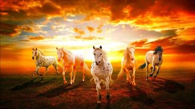 Beautiful Wallpaper Hd Horses Sunset Hd Wallpaper : Wallpapers13.com
