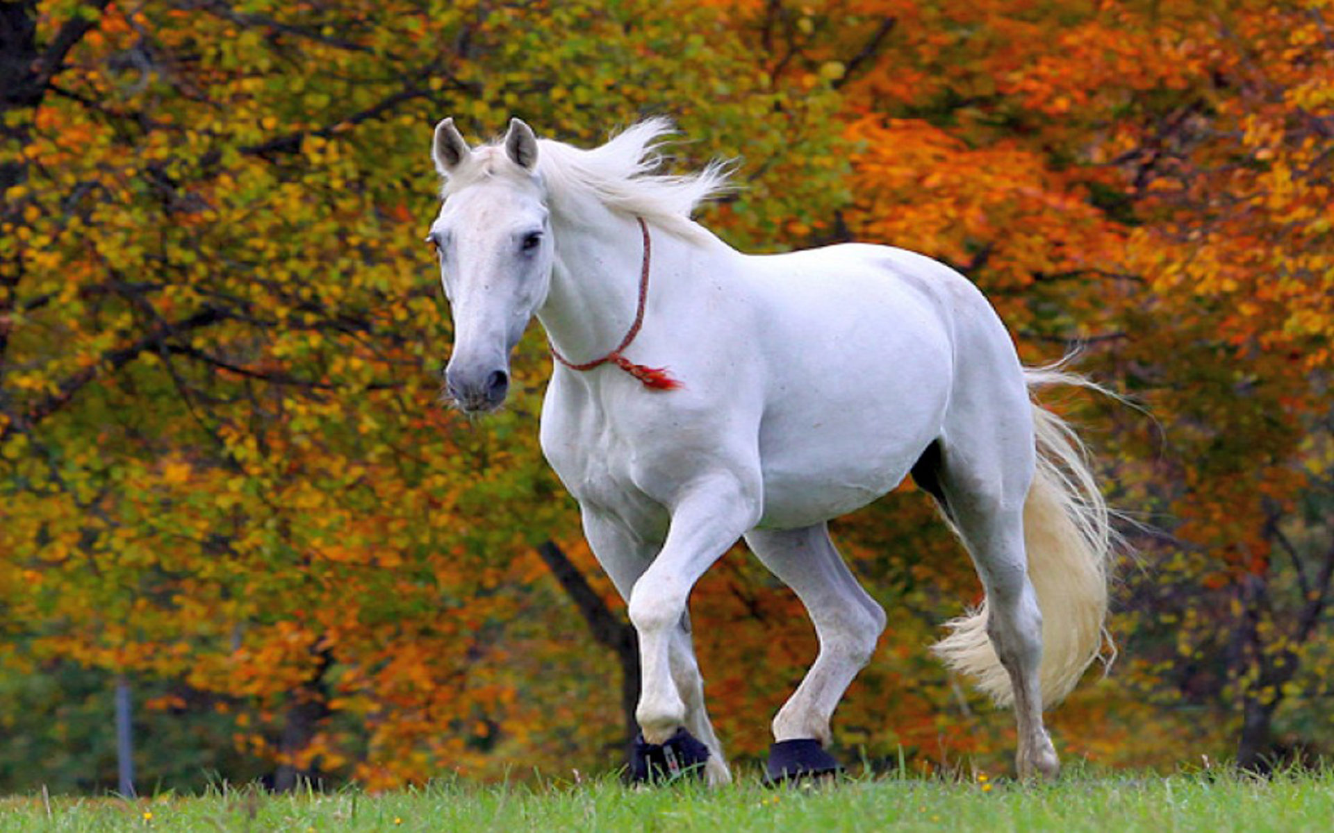 Free Cute Ipad Wallpapers Beautiful White Horse Wallpaper Hd 013 Wallpapers13 Com