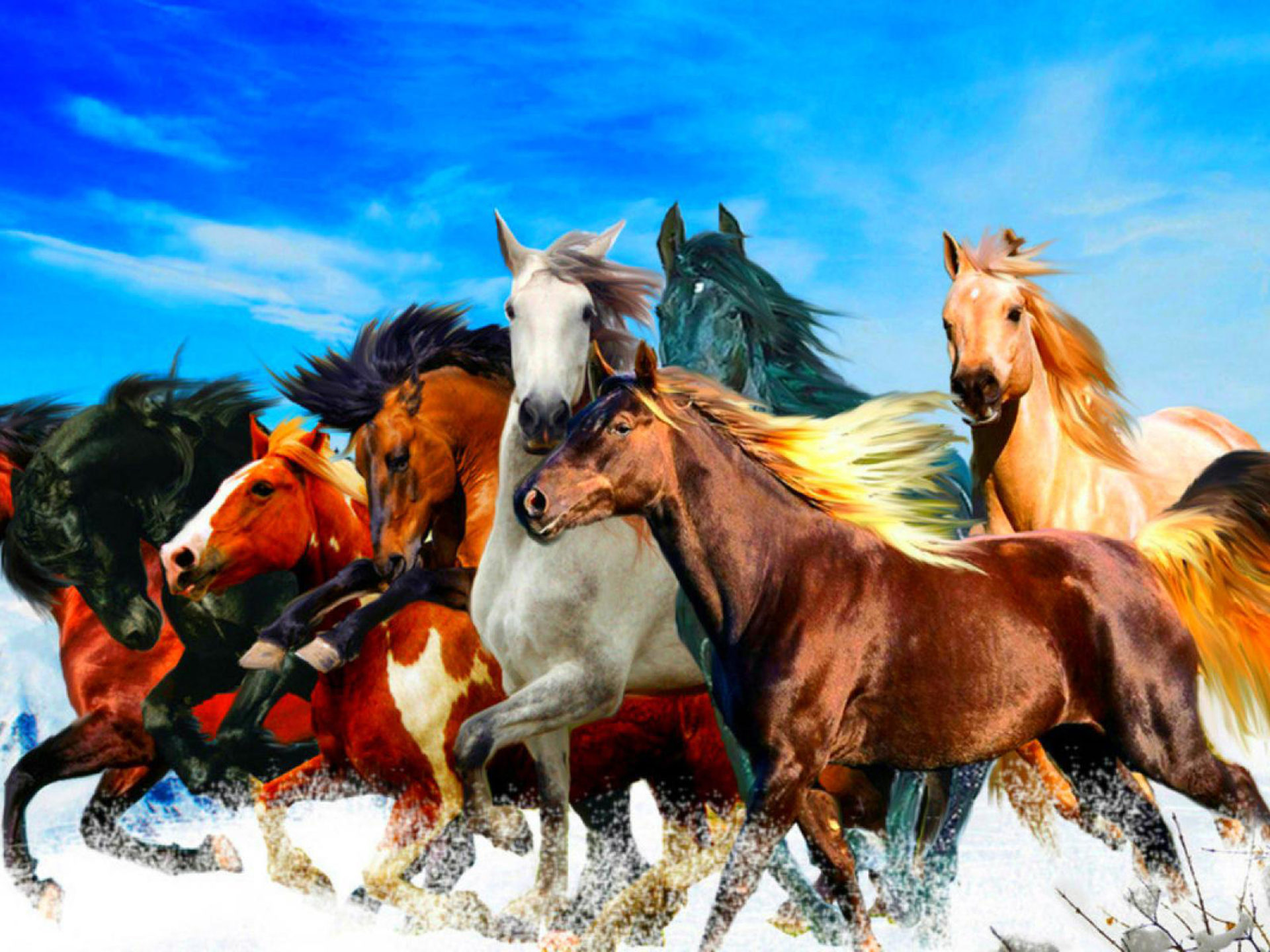 Wallpaper For Iphone X Live Beautiful Horses In Different Colors Blue Sky Hd Wallpaper