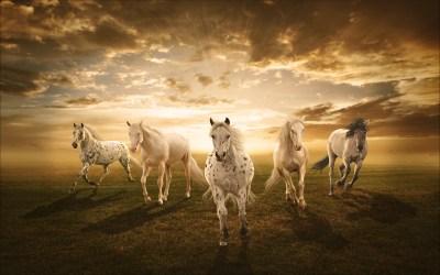 White Horses Desktop Background : Wallpapers13.com