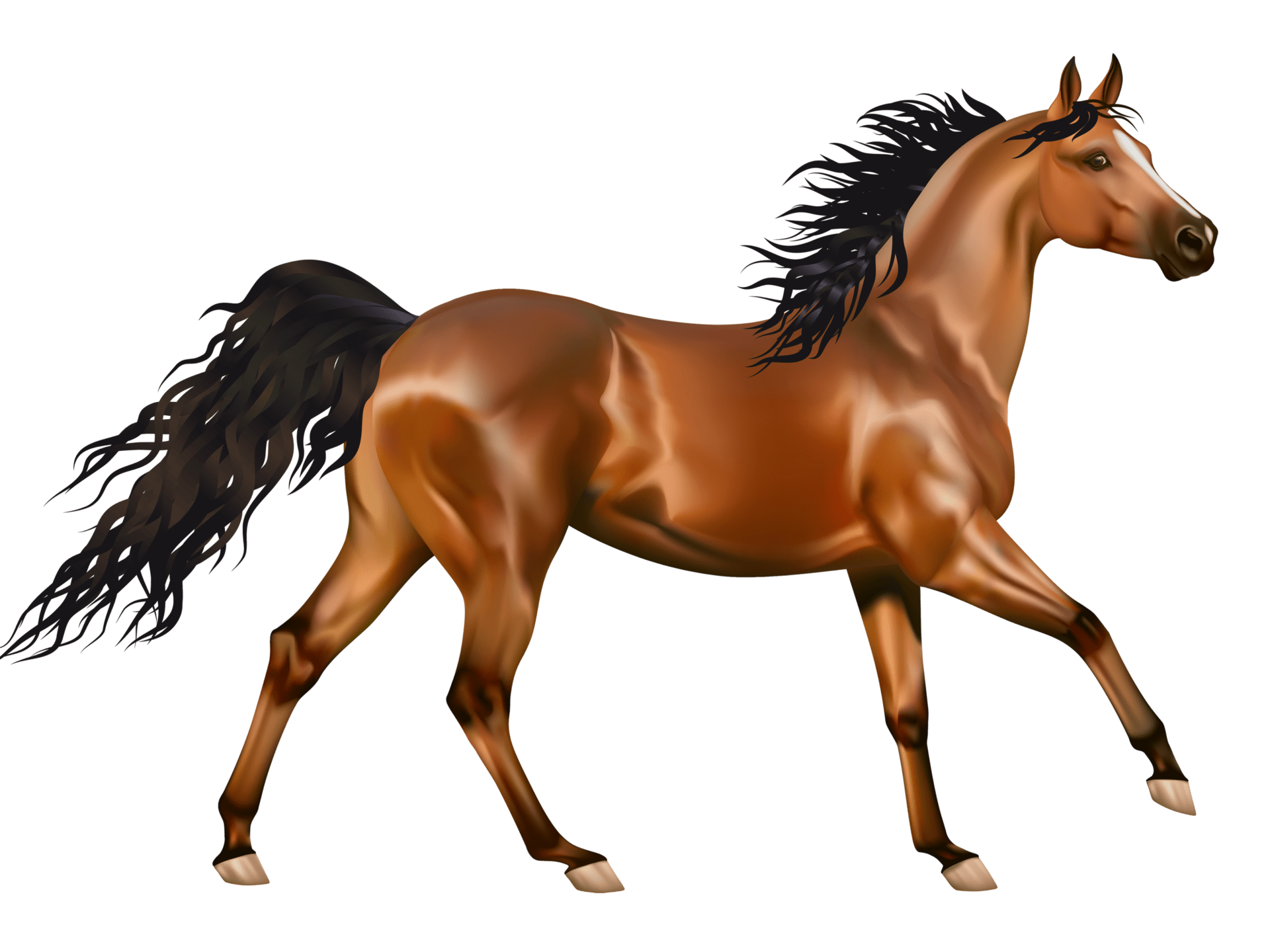 Lock Screen Wallpaper Hd Brown Horse Clip Art Wallpaer Hd 4700x2938 Wallpapers13 Com