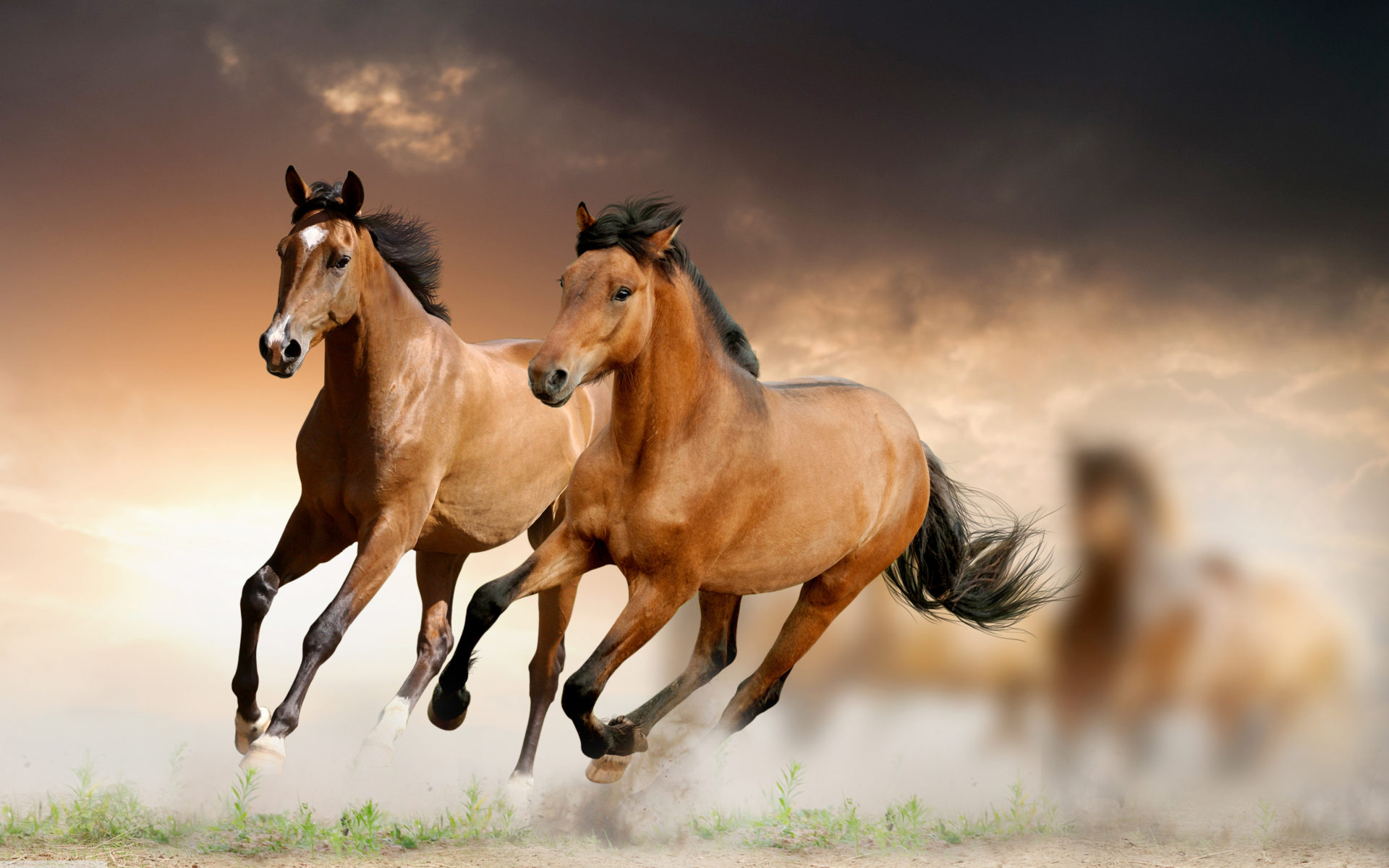 Anaconda Hd Wallpaper Brown Horses Galloping Wallpaper Hd 5120x3200