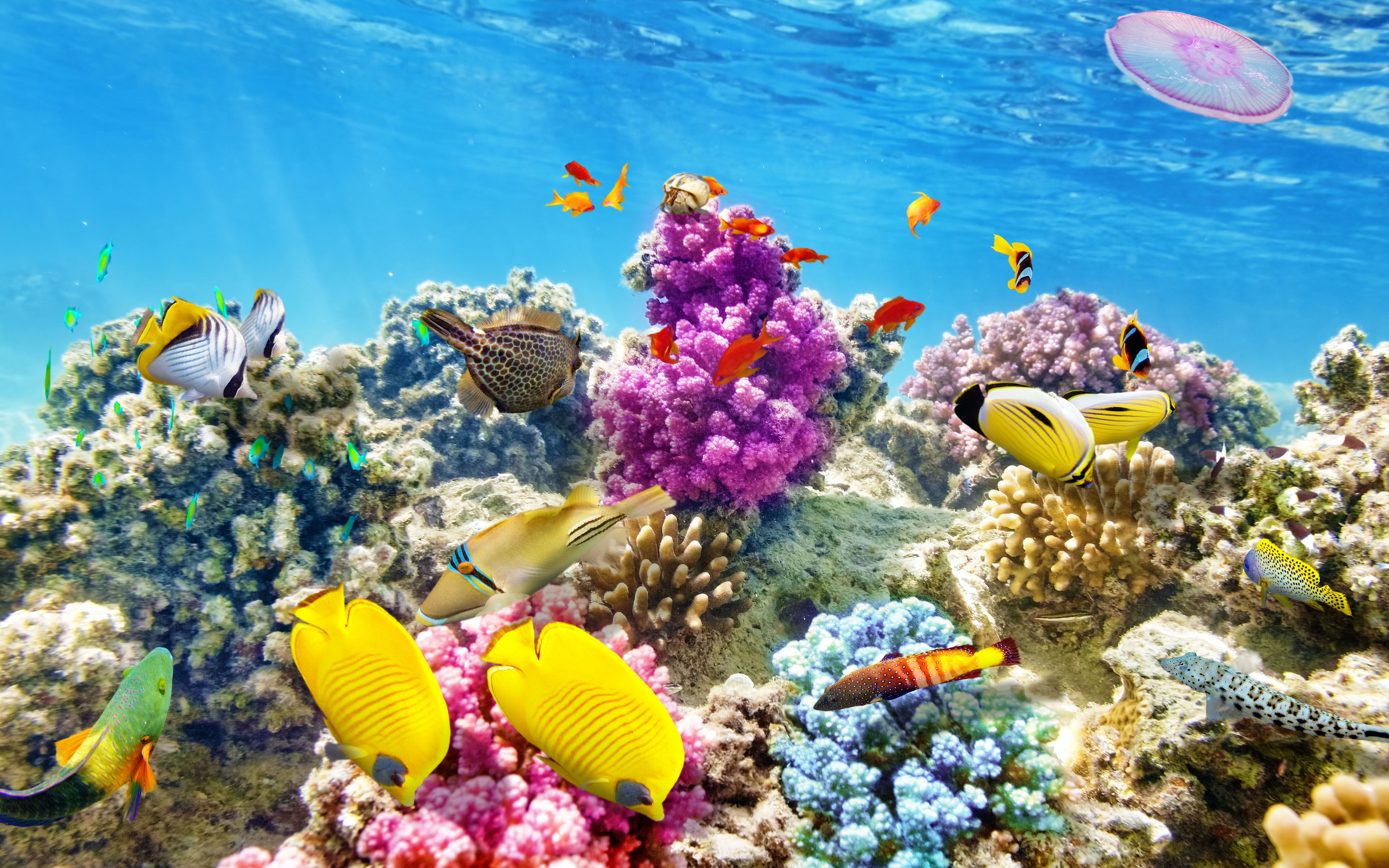 Hunting Iphone Wallpaper Download Wallpaper Underwater World Coral Reef Tropical