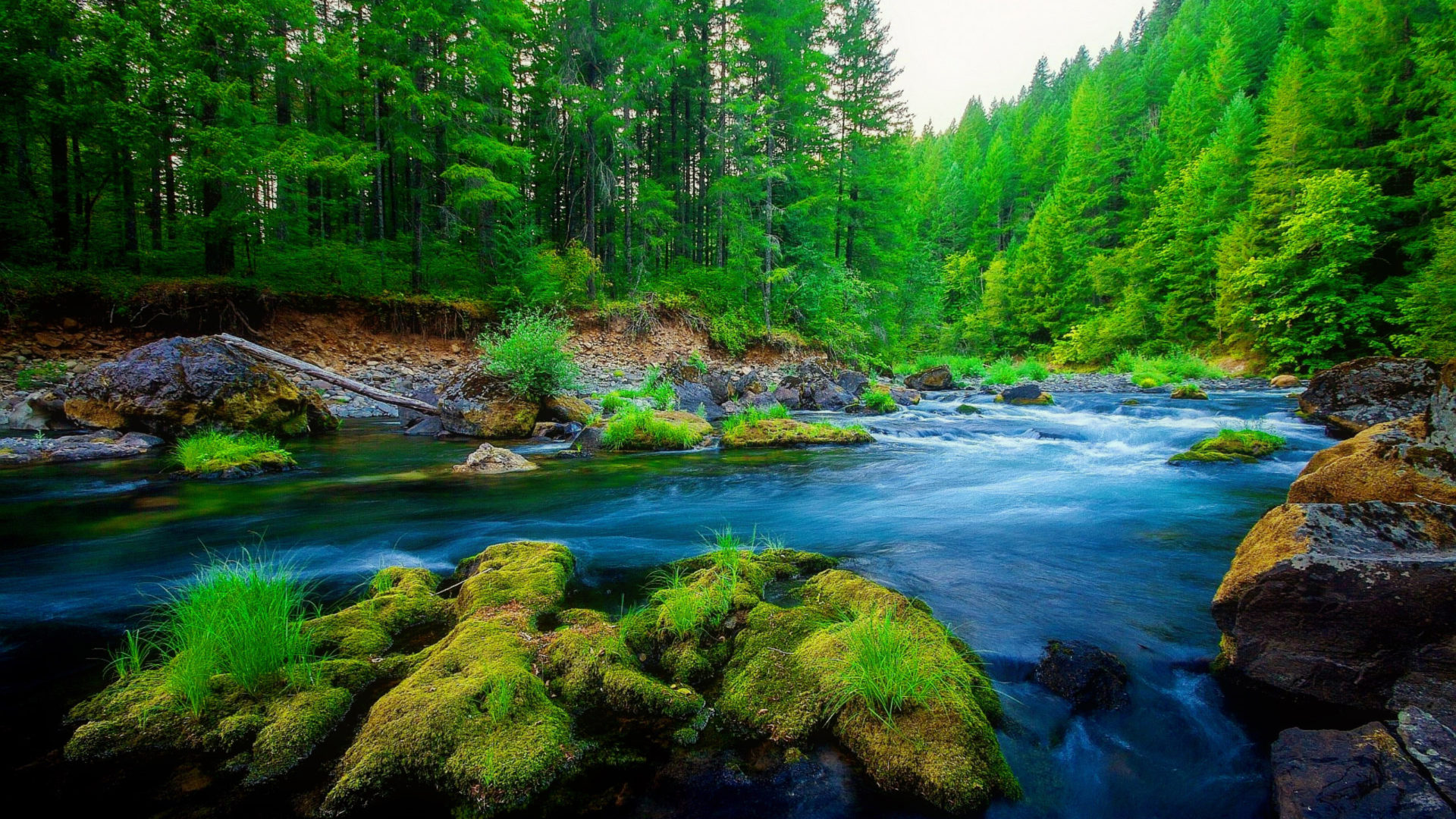 Black Lagoon Iphone X Wallpaper Green Pine Forest River Rock Beautiful Nature Hd Wallpaper