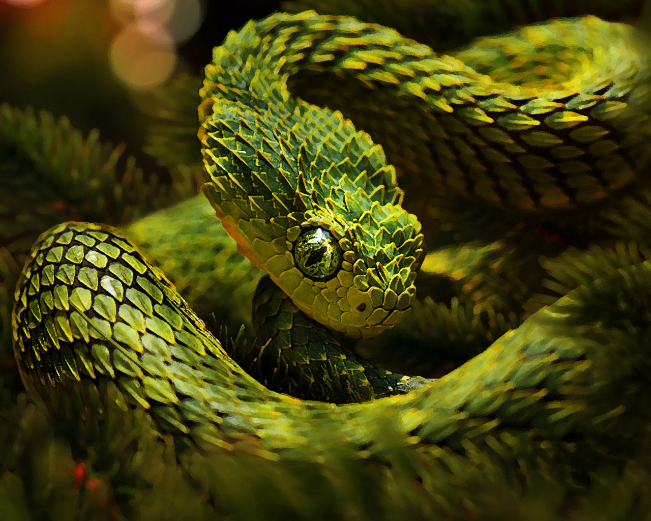 Black Camouflage Wallpaper Green Unusual Snakes Cactus Camouflage Hd Wallpaper