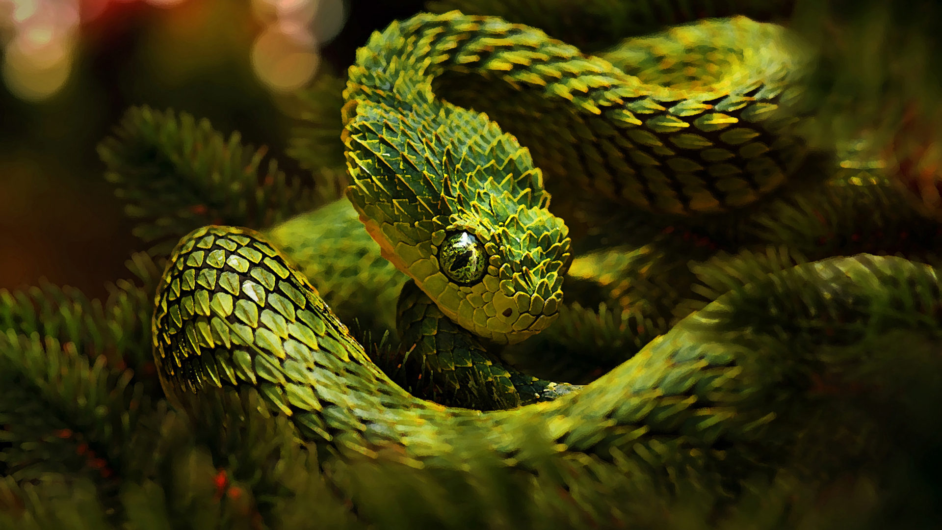 Lion Animal Wallpaper 3d Green Unusual Snakes Cactus Camouflage Hd Wallpaper