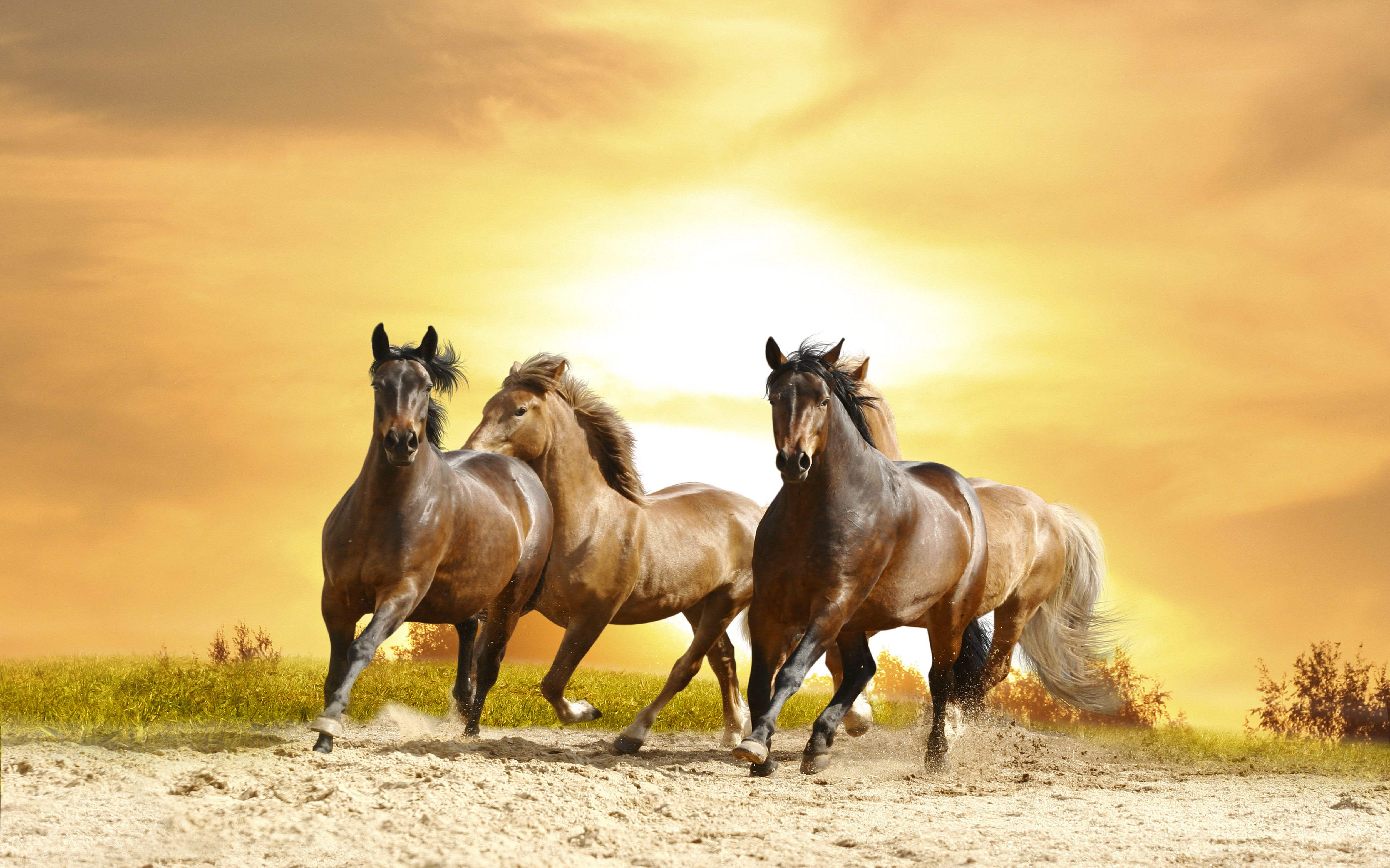 Wallpaper Cars Movie Horses Galloping Sunset Hd Wallpaper 8592 Wallpapers13 Com