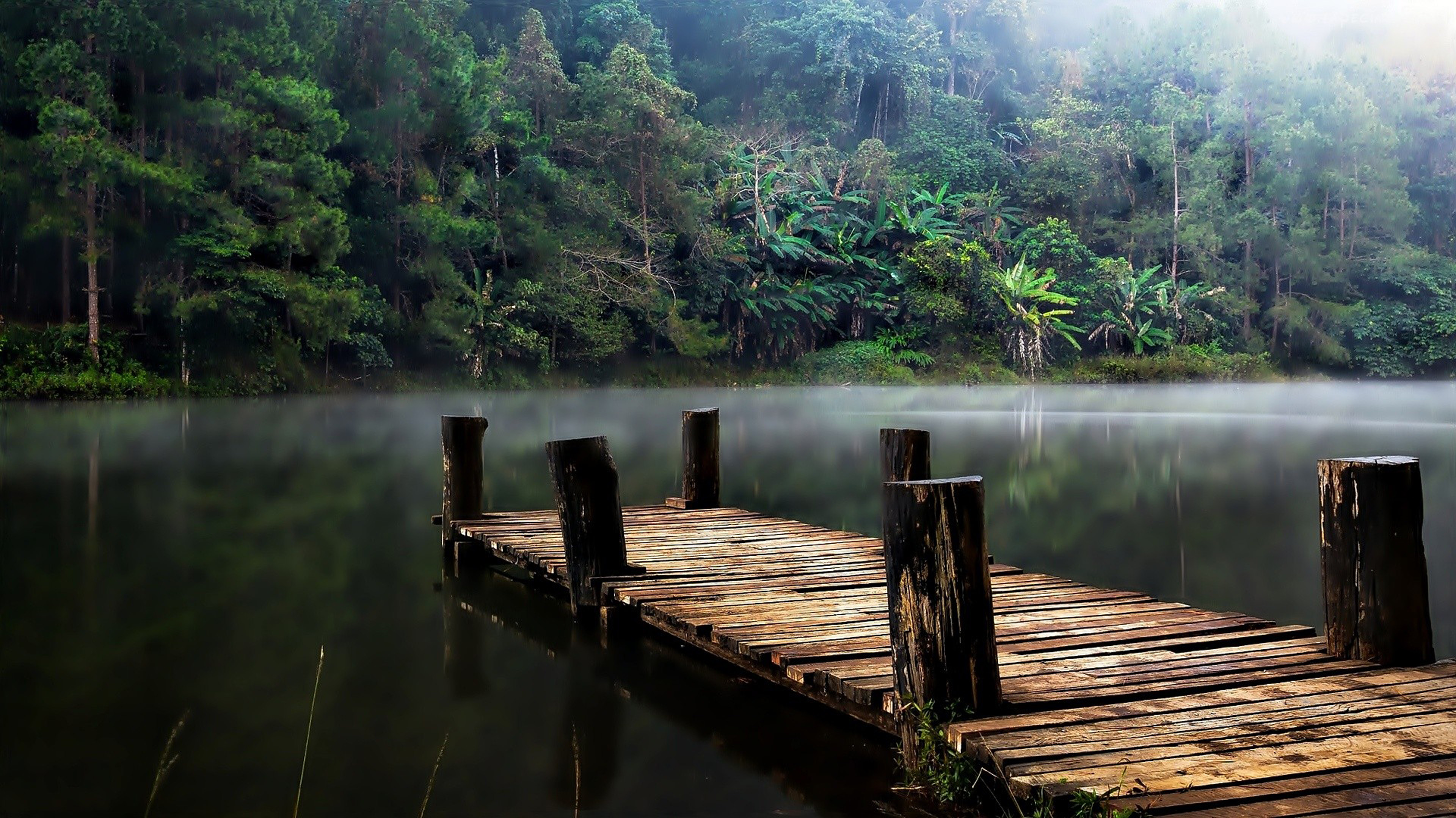 3d Illusion Wallpapers For Desktop Jungle Lake Bridge Evaporation Fog Hd Wallpaper