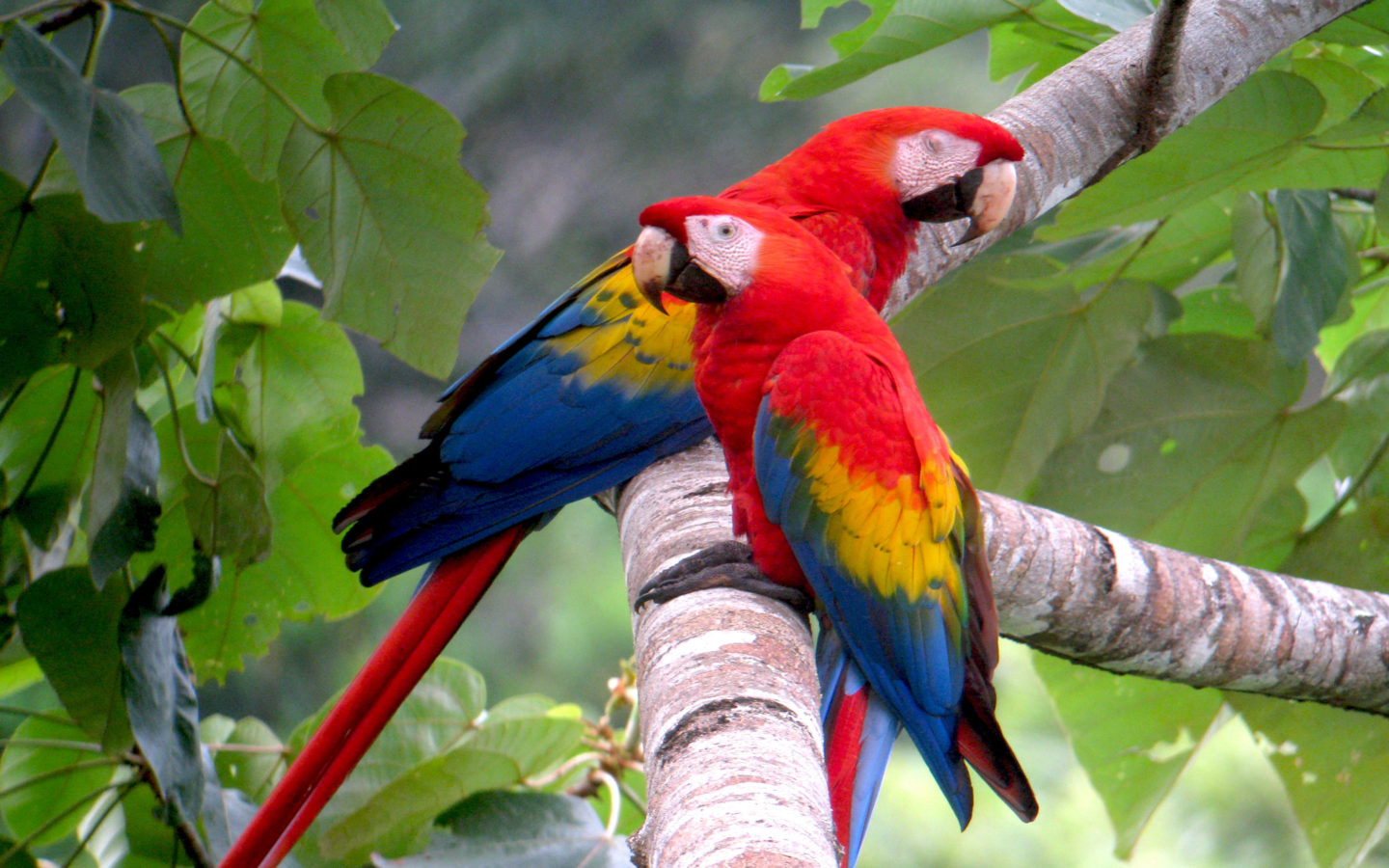 Fall Wallpaper For Android Tablet Large Tropical Parrot Colored Background Lap Top And