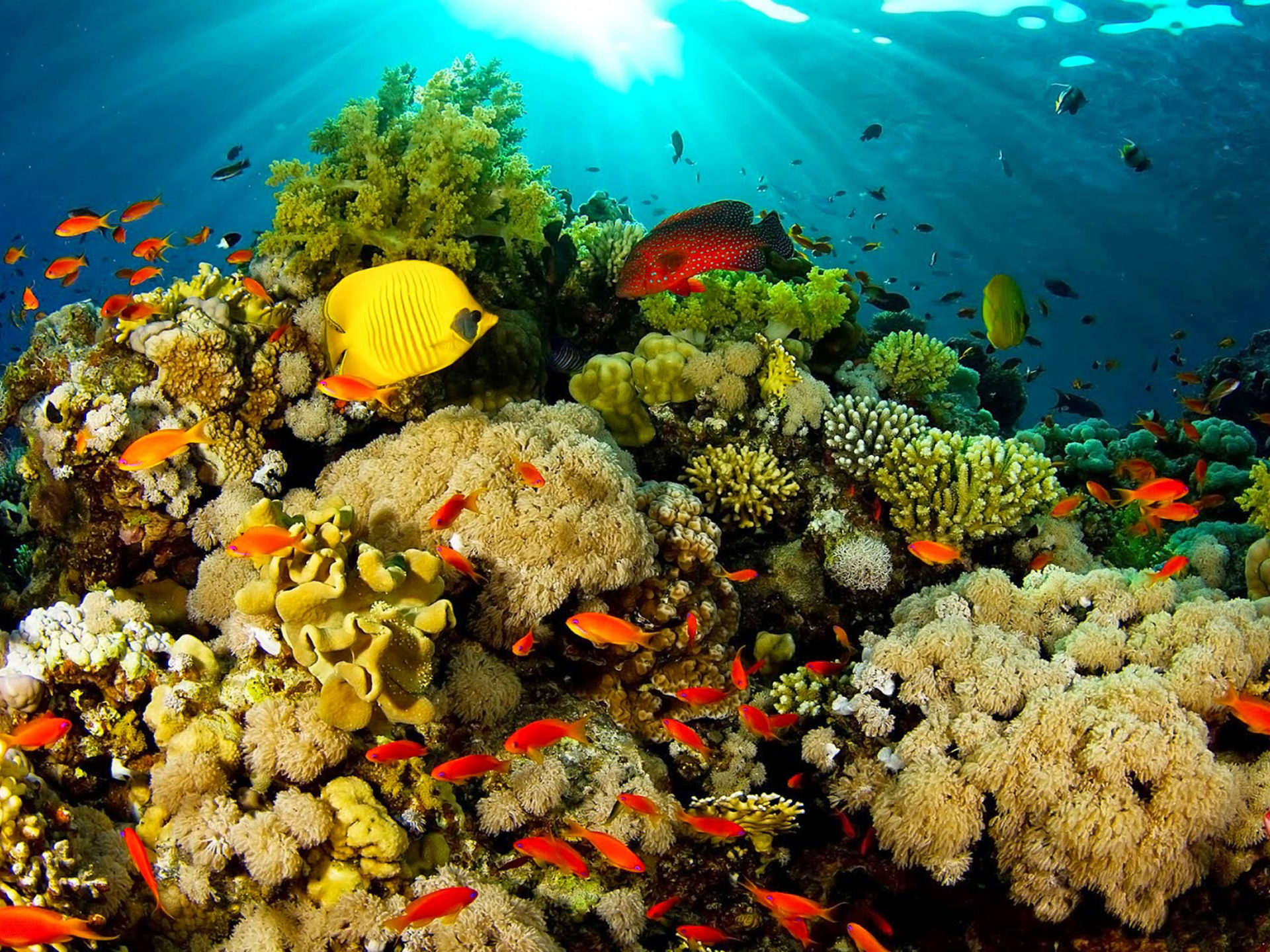 World Beautiful Cars Wallpapers Ocean Fauna Under Water Coral Reefs With Beautiful Coral