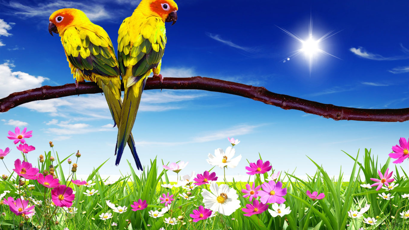 How To Get An Animated Wallpaper Windows 10 Parrots Pair Hd Desktop Background For Mobile Phone And