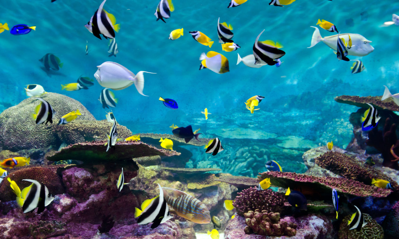 Iphone Fish Wallpaper Fishes And Coral Underwater Life Wallpapers13 Com