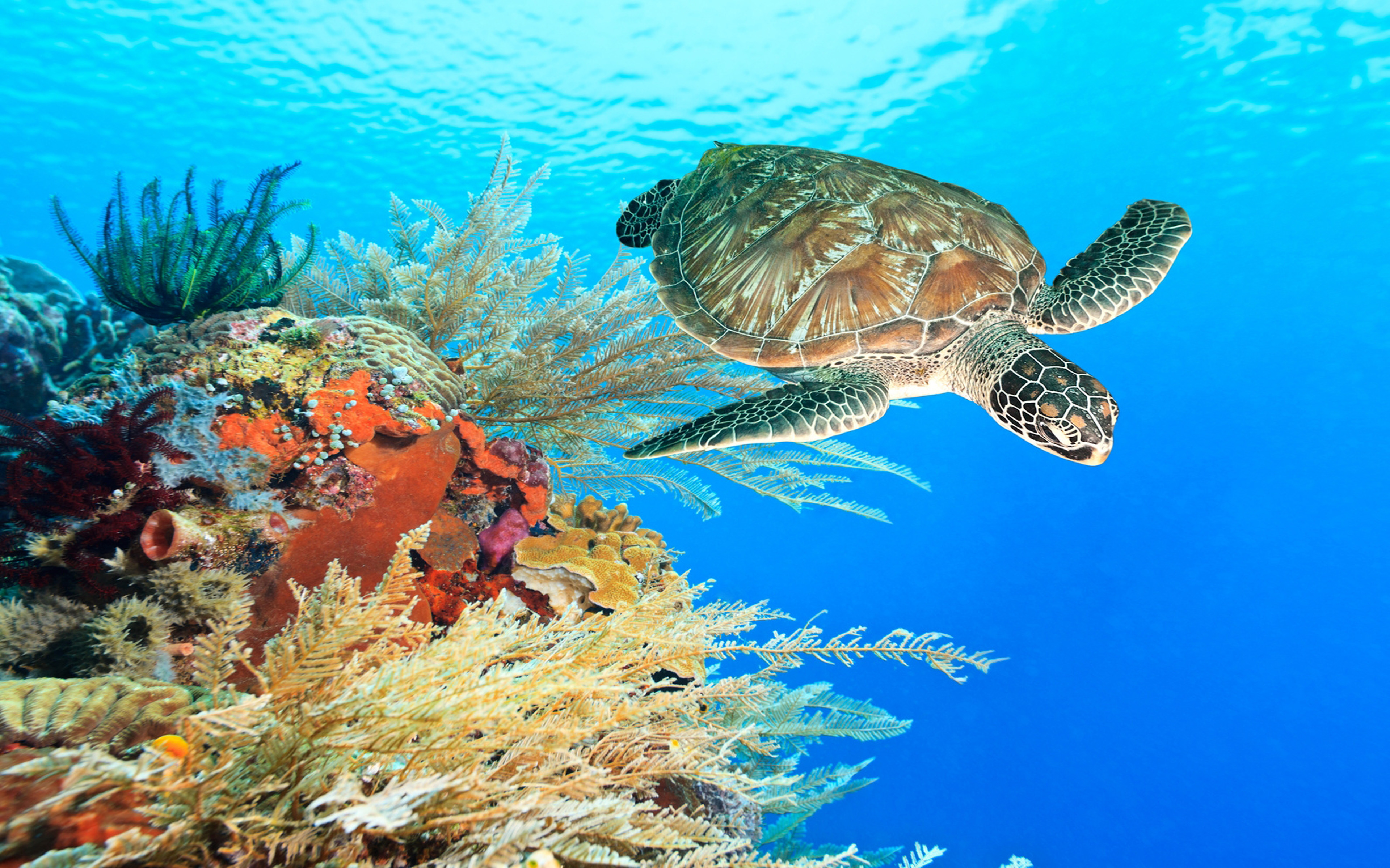 Fall Cartoon Wallpaper Turtle Swimming Underwater Among The Coral Reef