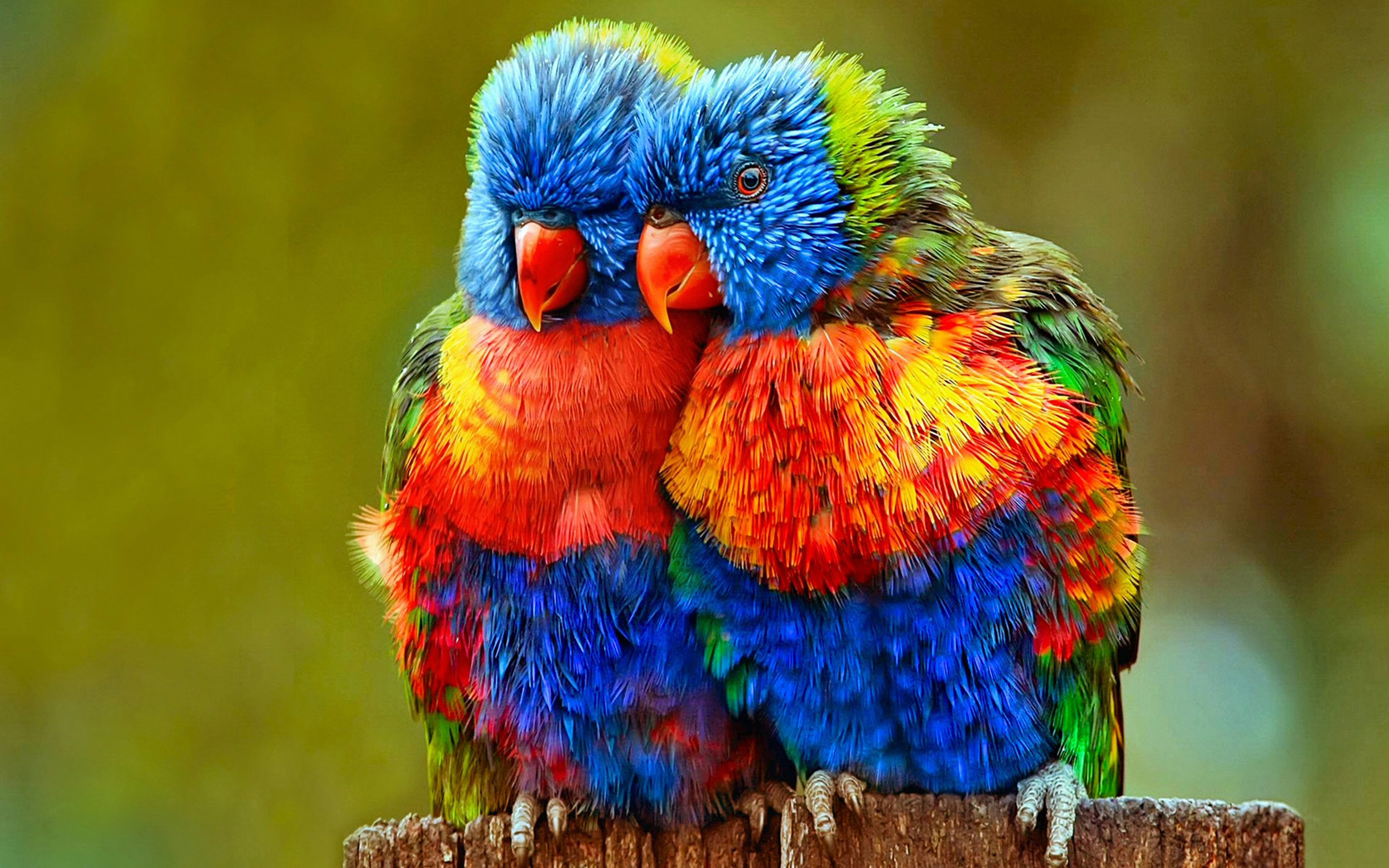 Singapore Wallpaper Hd Small Colorful Parrots Wallpapers Hd Wallpapers13 Com