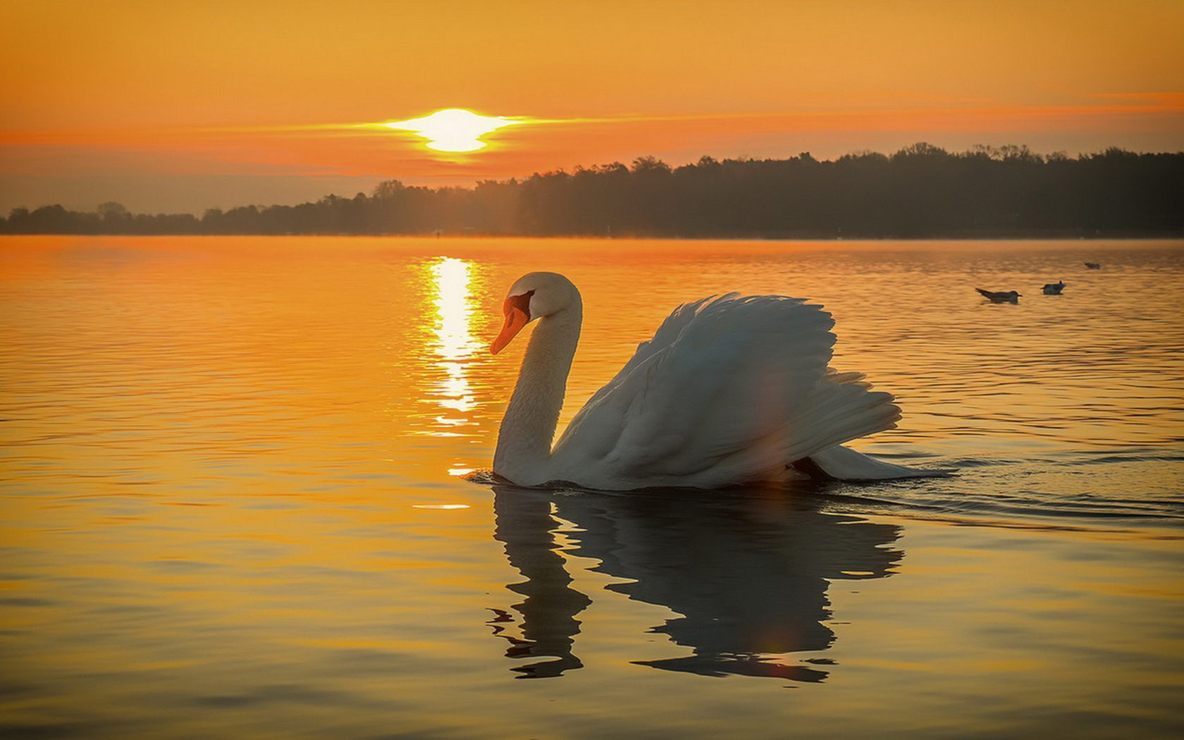 Iphone X Wallpaper Gif Landscape Swan Bird Lake Beautiful Sunset Wallpaper Hd