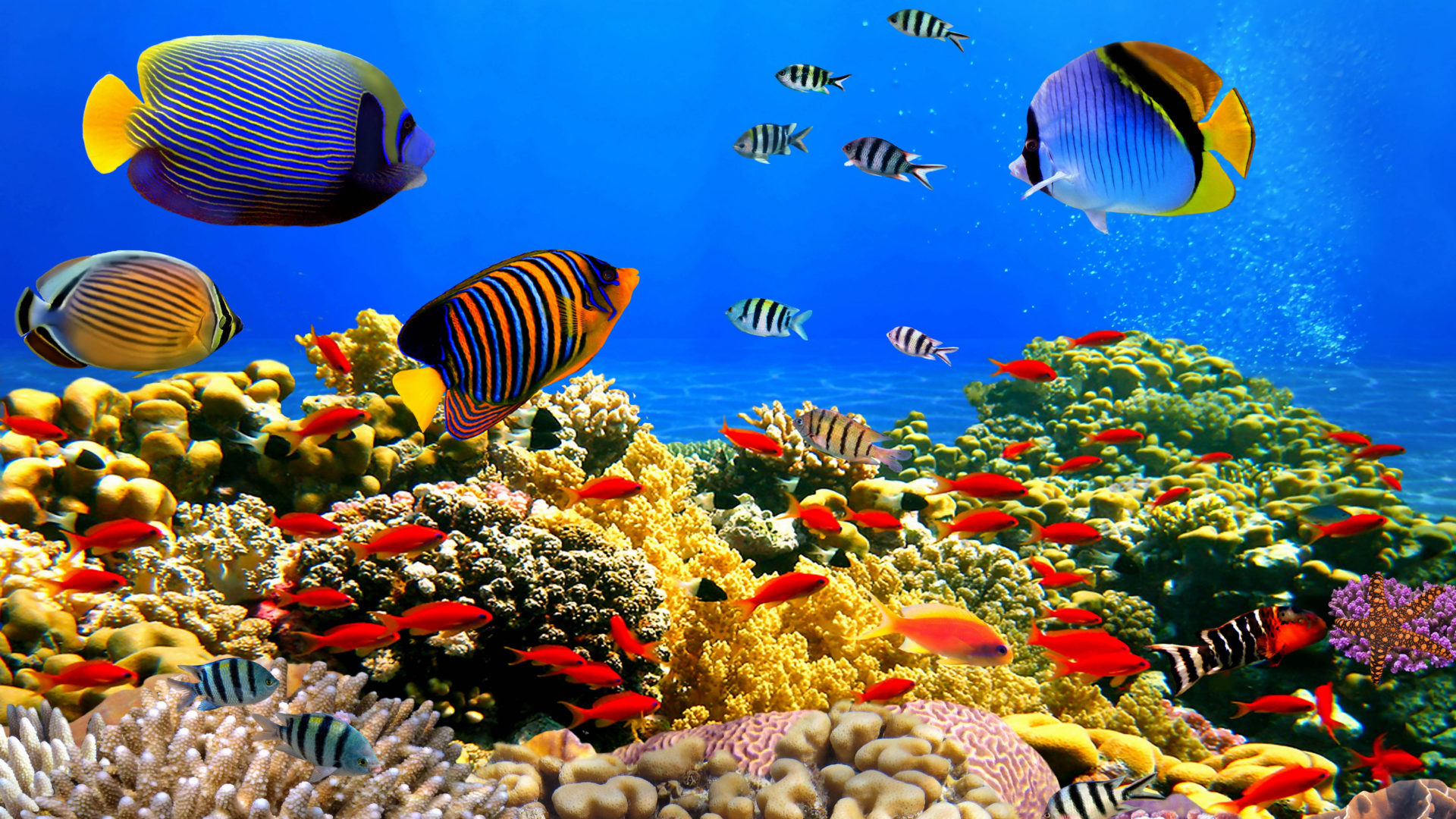 Fish Wallpaper Hd Underwater World Corals Tropical Colorful Fish Hd Desktop