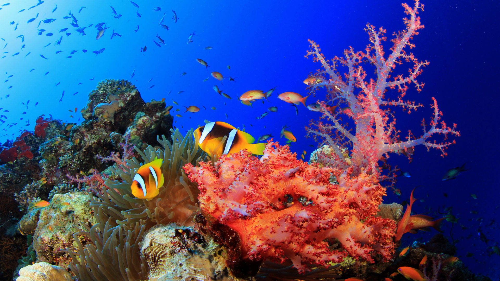 Hunting Iphone Wallpaper Underwater World Okean Corals Tropical Colorful Fish Hd