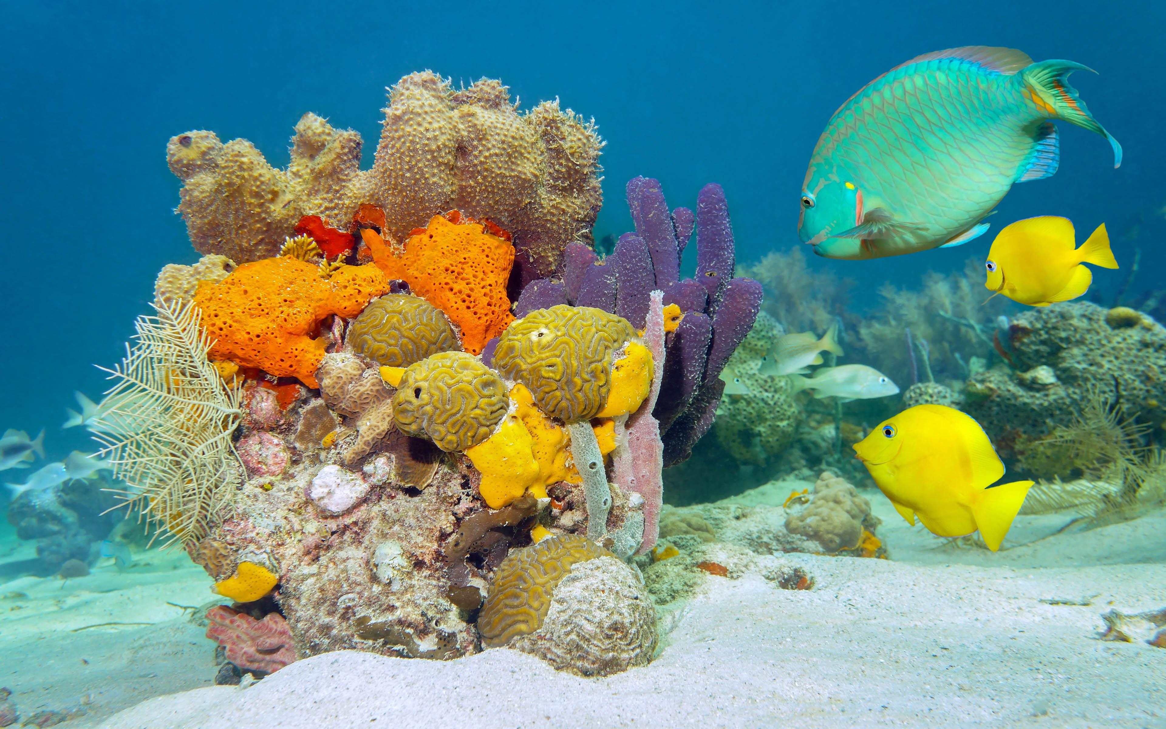 Green Parrot Wallpaper 3d Underwater World Fish Desktop Wallpaper Hd Wallpapers13 Com