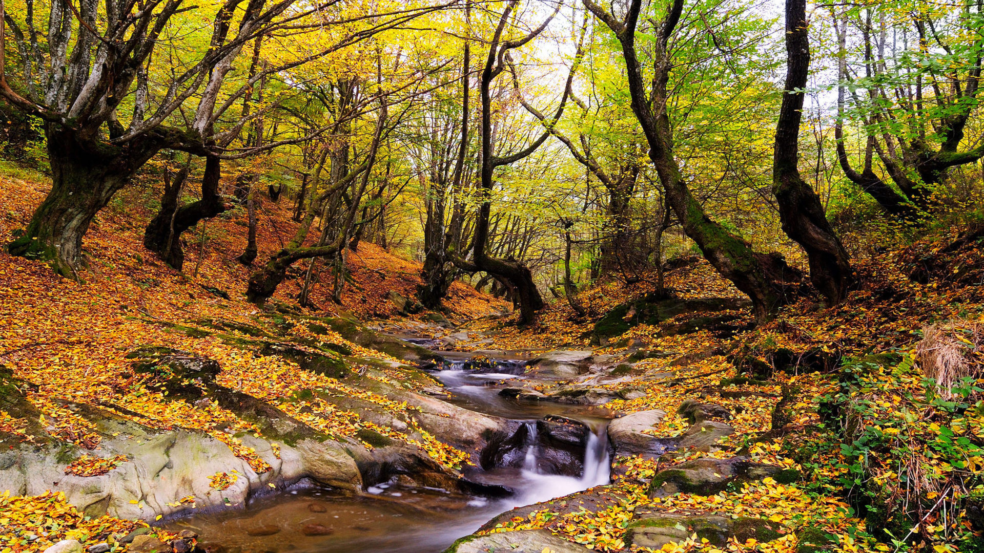 Fall Wallpaper For Computer Screen Wonderful Autumn Landscape Forest Trees Stream Fallen
