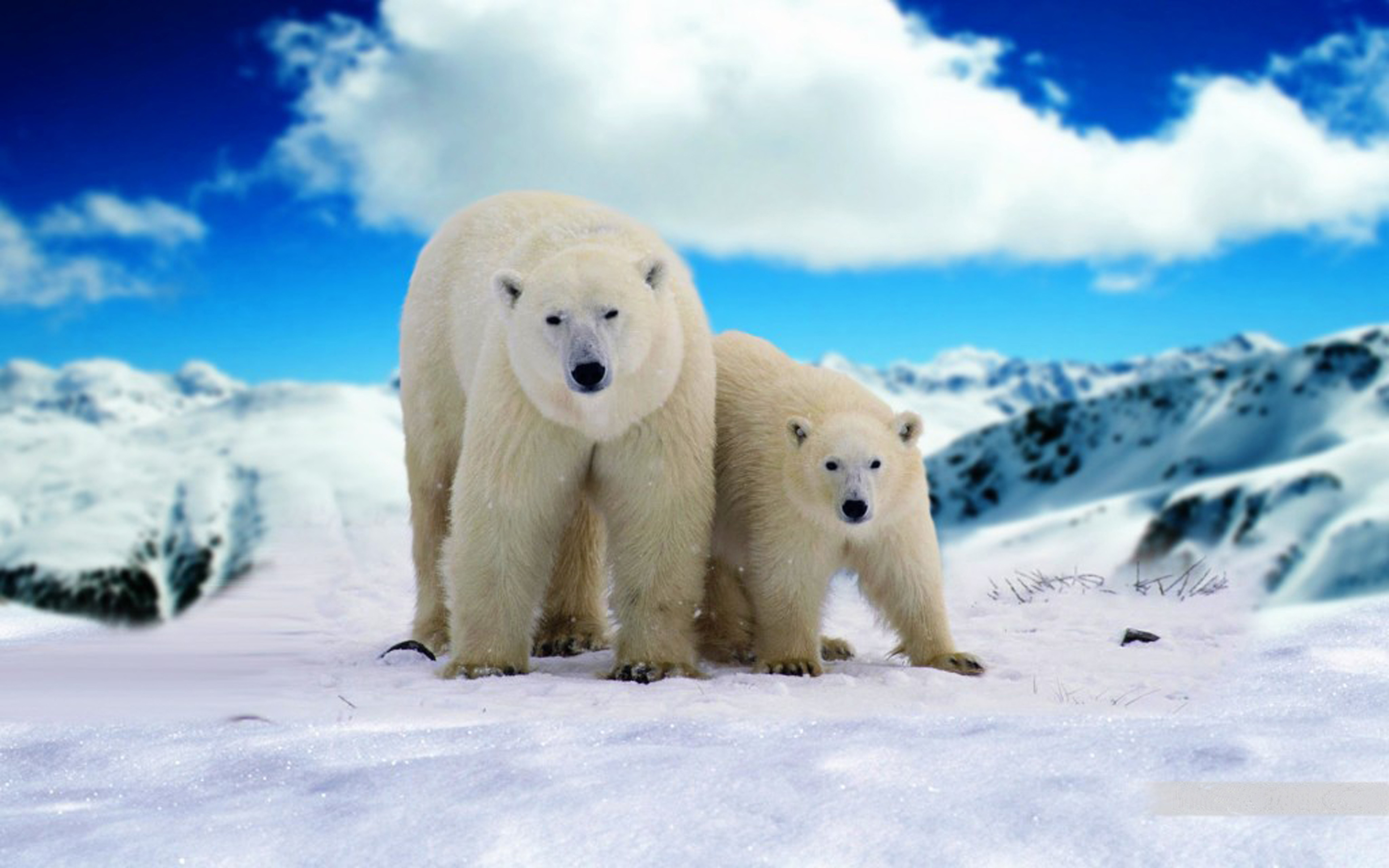 Cute Birds Wallpapers For Mobile Phones Adult Polar Bear And Young Bear Hd Wallpapers For Mobile