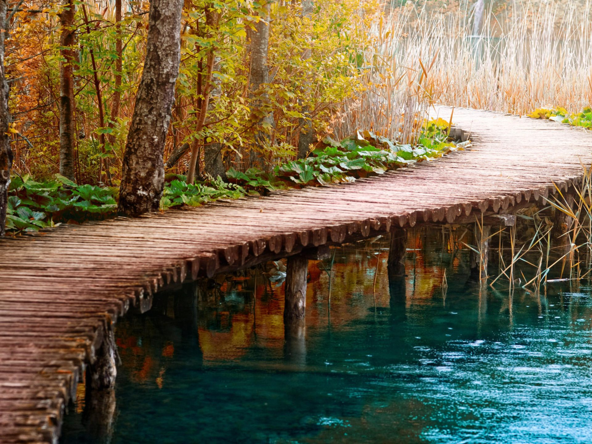 Fall Forest Wallpaper Autumn Background River Wooden Path Bridge Cane Reeds Dry