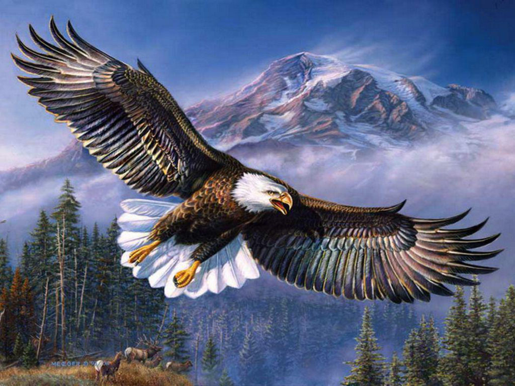 Donald Duck Iphone Wallpaper Beautiful Background Bald Eagle In Flight Wings Spread Hd