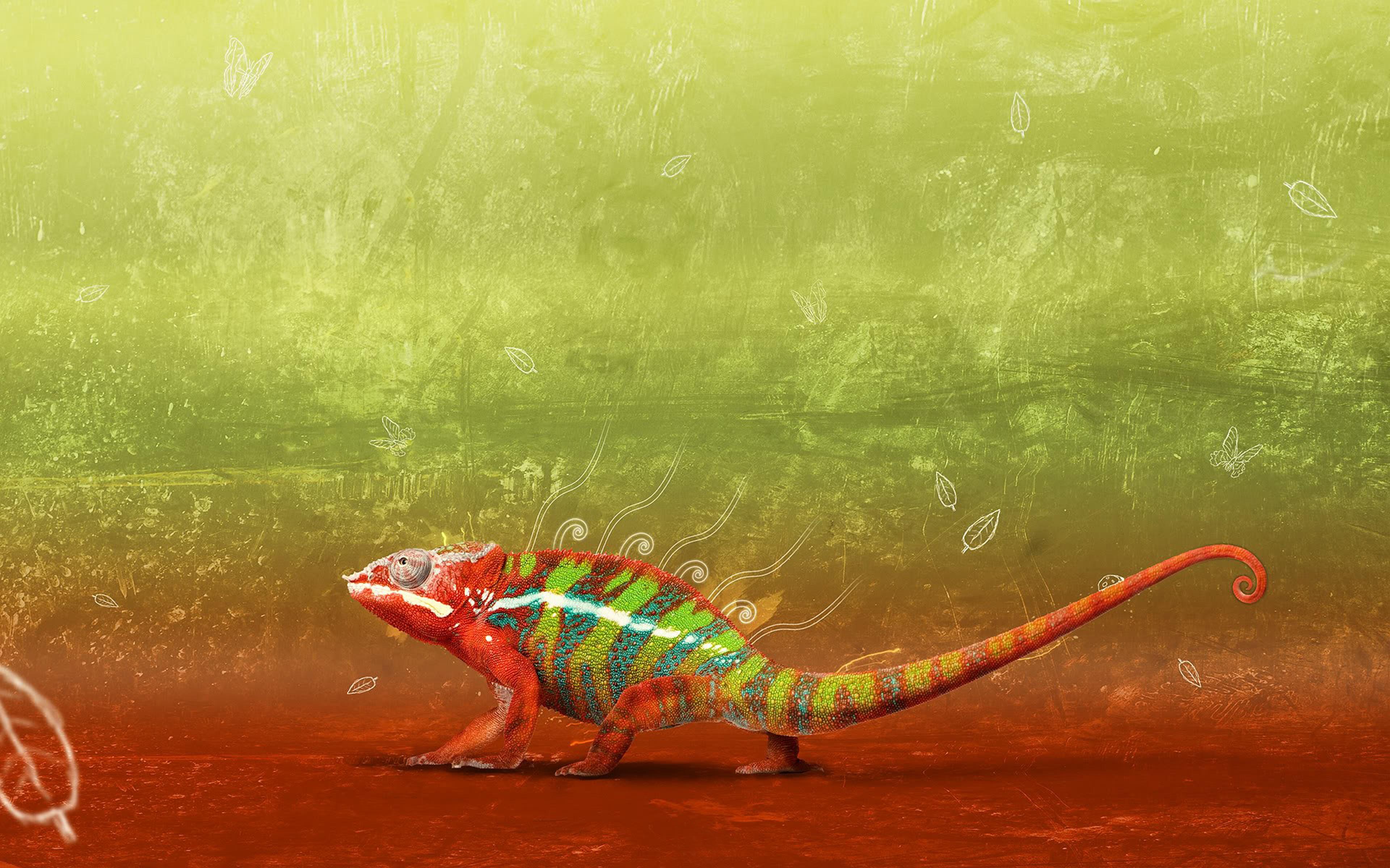 Cute Birds Wallpapers For Desktop Chameleon Lizard Change Color Hd Wallpaper Wallpapers13 Com