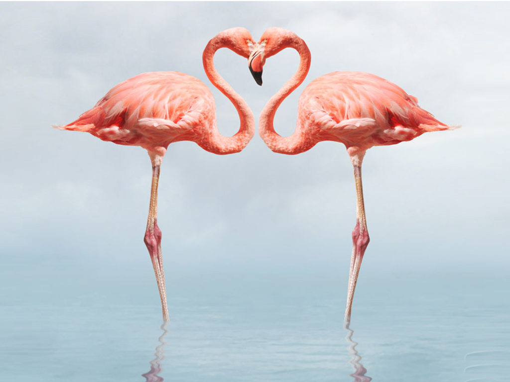 Sea Hd Wallpapers 1080p Flamingo Full Hd Wallpapers 1080p Wallpapers13 Com