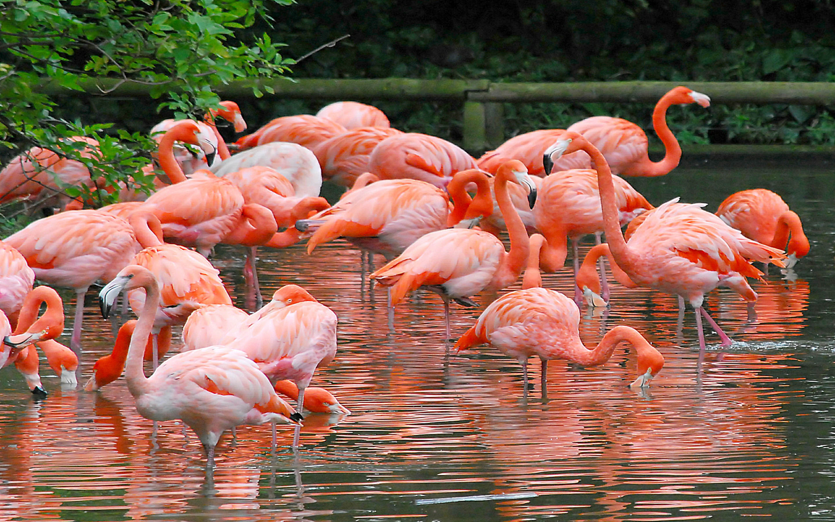 Exotic Cars Wallpaper 1920x1080 Flamingo There Are Four Species Of Flamingos In America