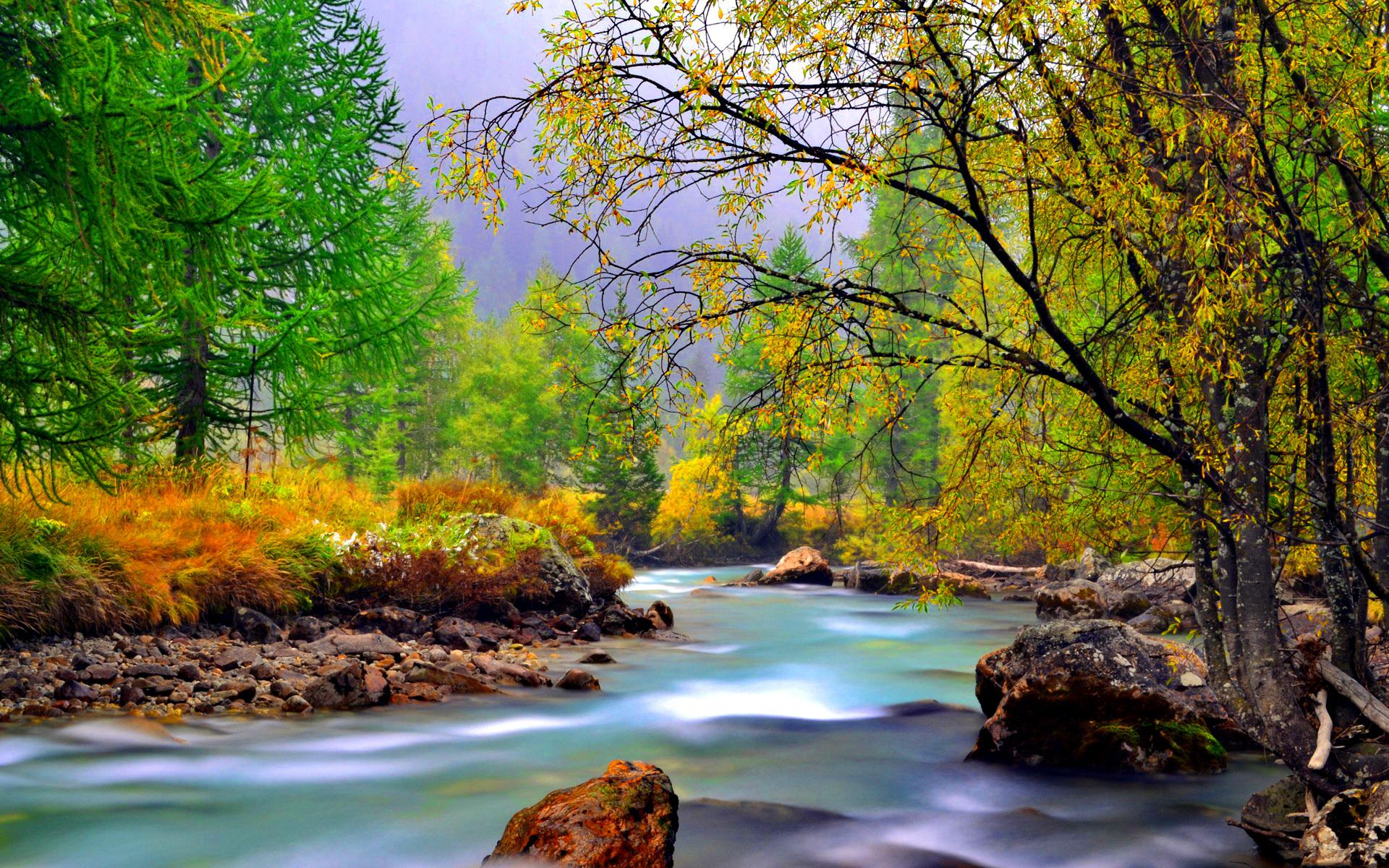 Animated Hd Wallpapers 1080p Free Download Mountain River With Rocks Rocks Yellowed Grass Evergreen