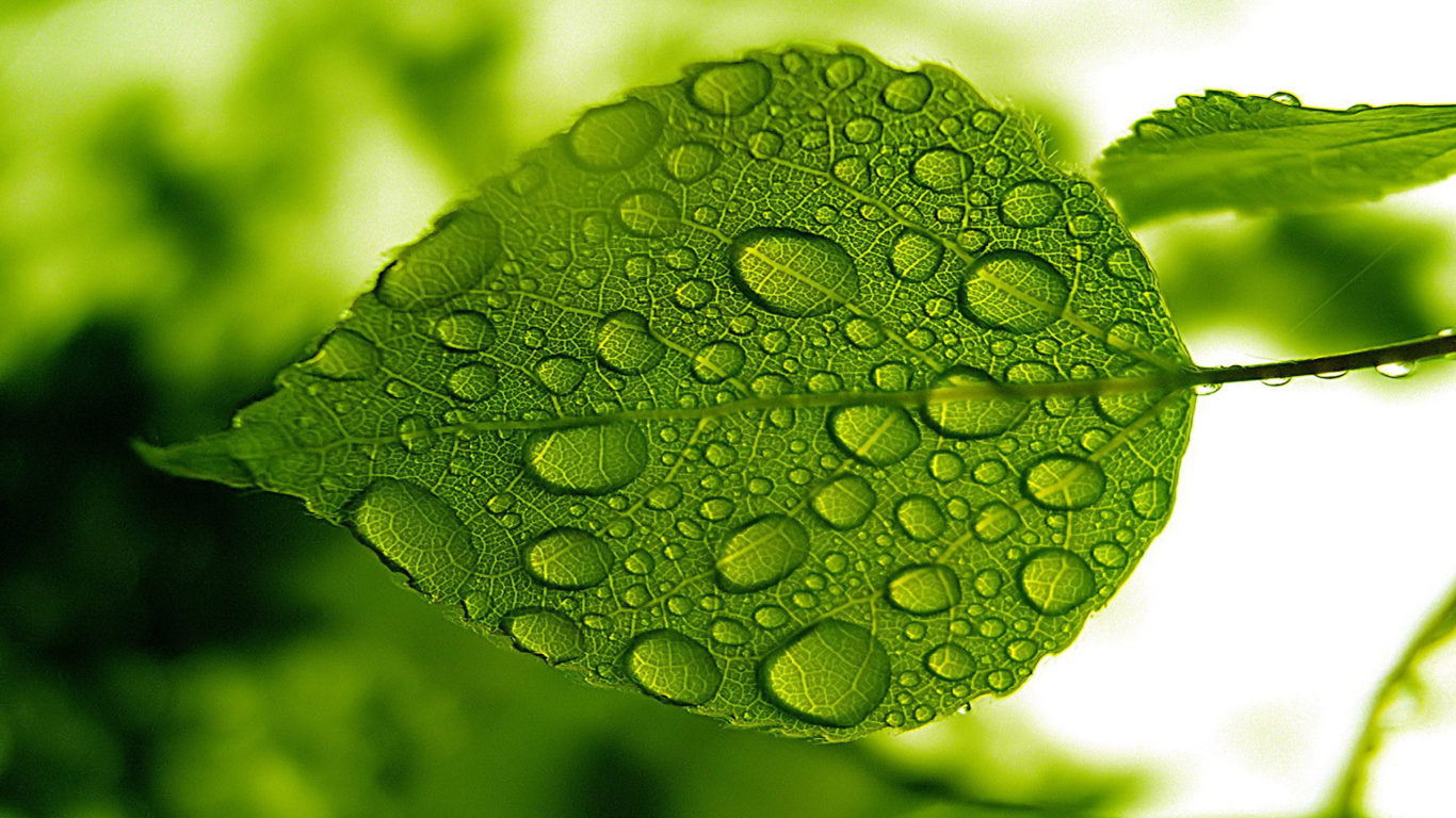 3d Batman Hd Wallpaper Nature Green Leaf With Water Droplets Hd Widescreen Free