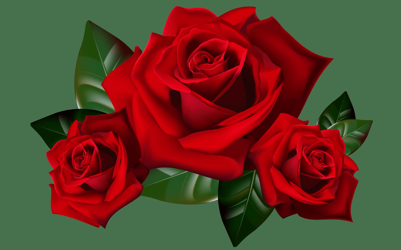 Hd Wallpapers Butterflies Widescreen Red Roses Png Clipart Picture Hd Desktop Wallpaper