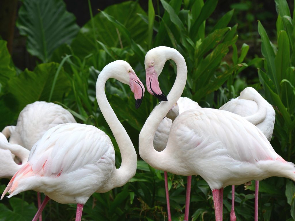 Hd Wallpapers Android Lock Screen White Flamingo Desktop Wallpaper Hd Wallpapers13 Com