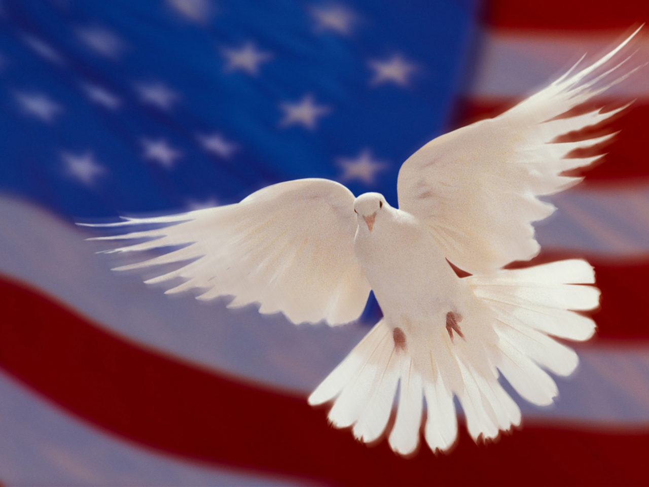 Hd Wallpaper Sea Beach American Flag And White Dove Of Peace Hd Wallpapers For