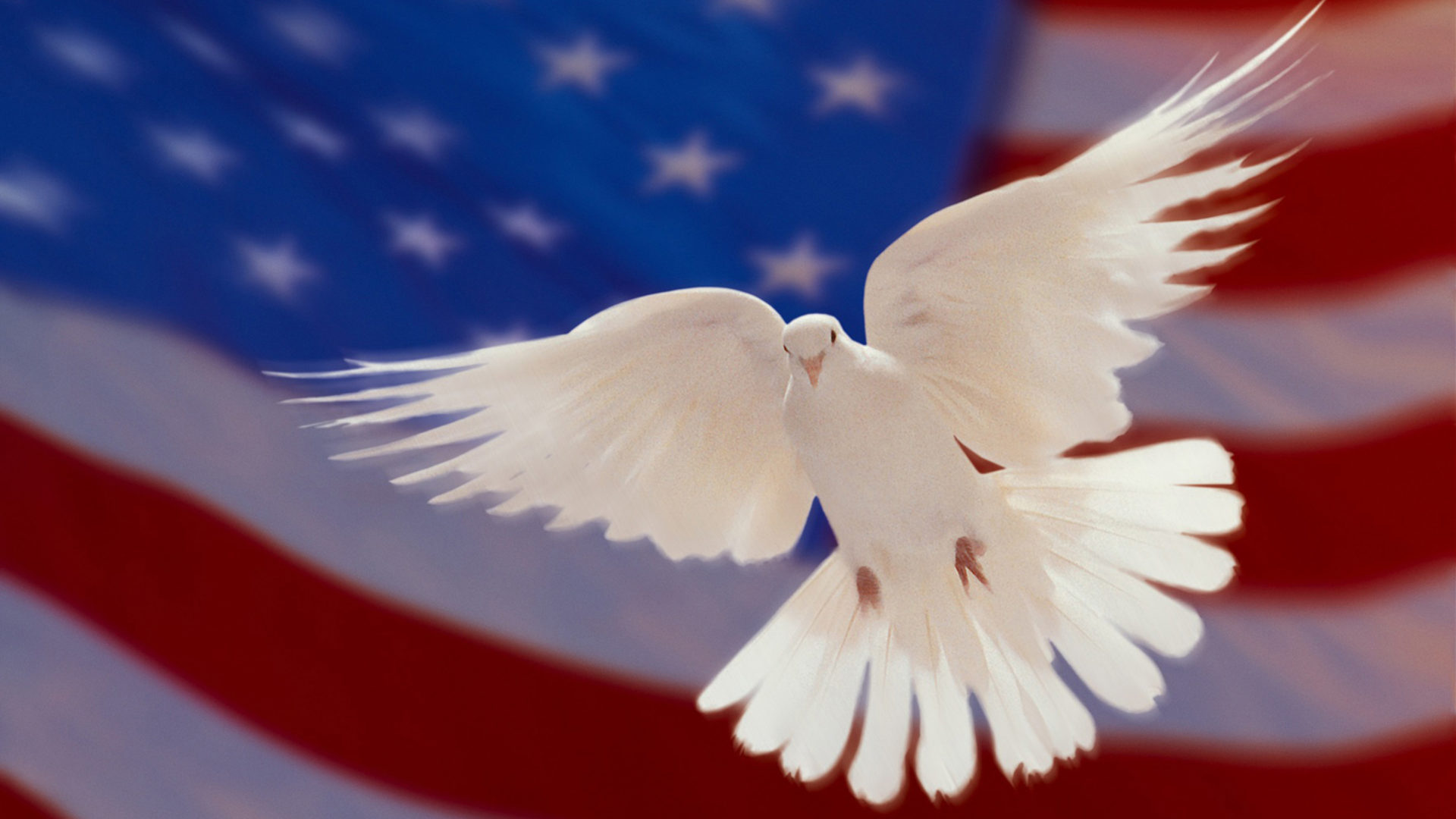 Cute Ducks In Water Wallpaper American Flag And White Dove Of Peace Hd Wallpapers For
