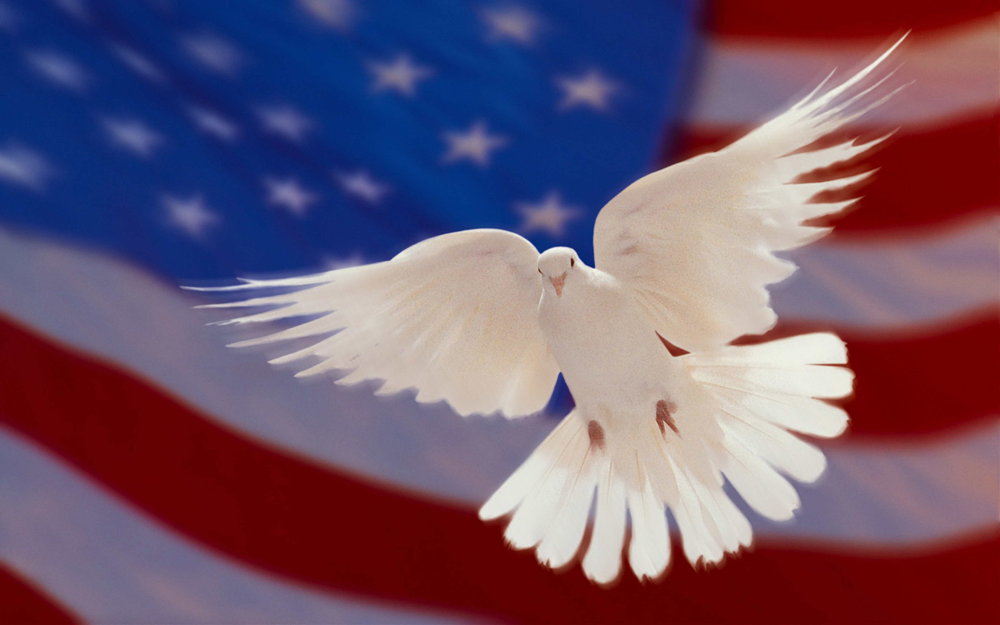 Wallpaper Black And White Flowers American Flag And White Dove Of Peace Hd Wallpapers For