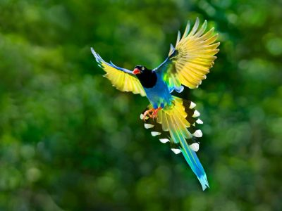 Colorful Toucan Bird Flying Spread Wings Tail Hd Desktop Backgrounds Free Download ...