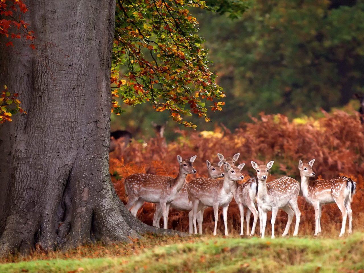Desktop Wallpaper Fall Water Deer Herd Autumn Forest Grass Trees 3840x2400