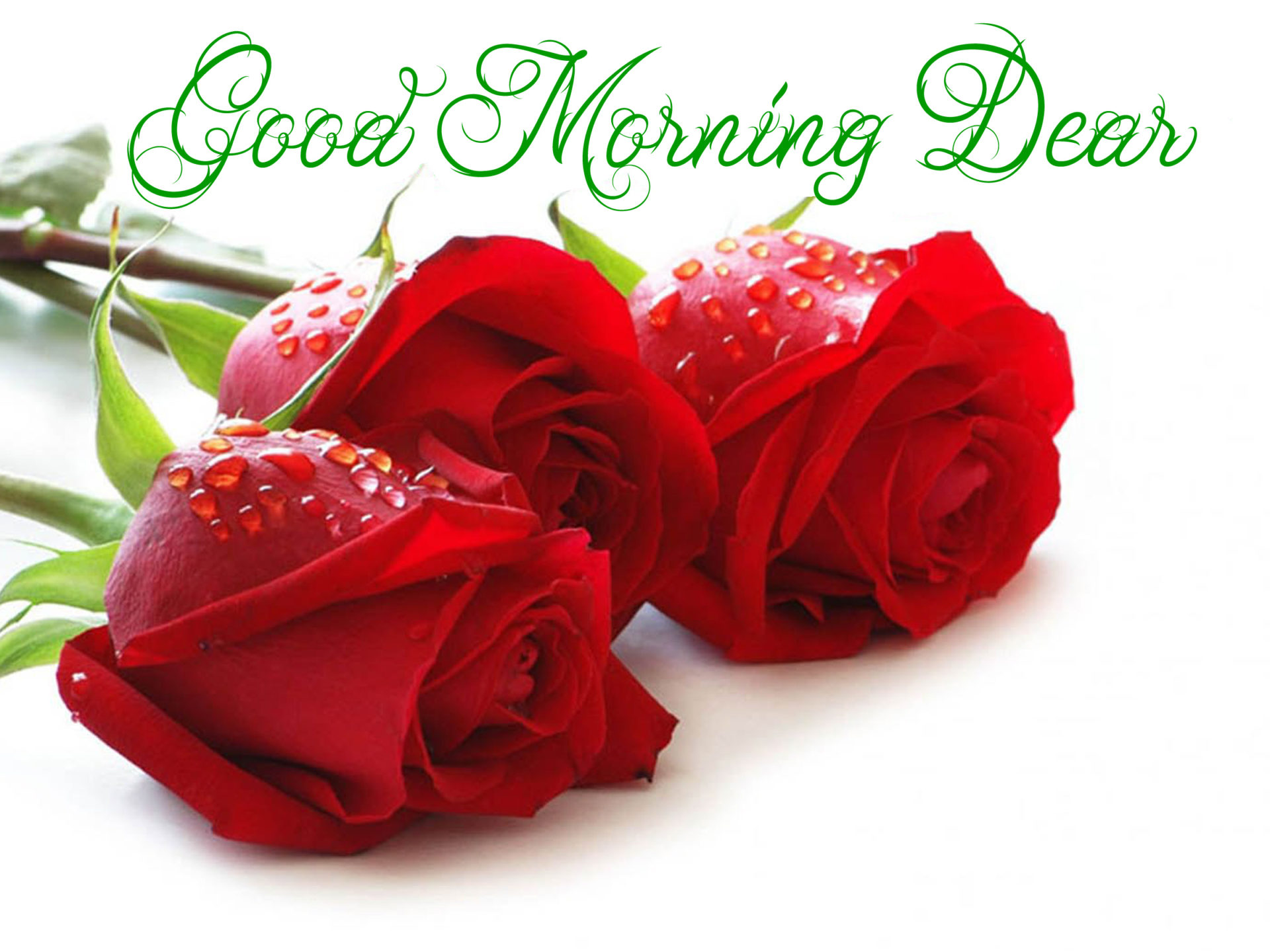 3d Love Hearts Wallpapers Good Morning Dear Red Roses With Water Droplets