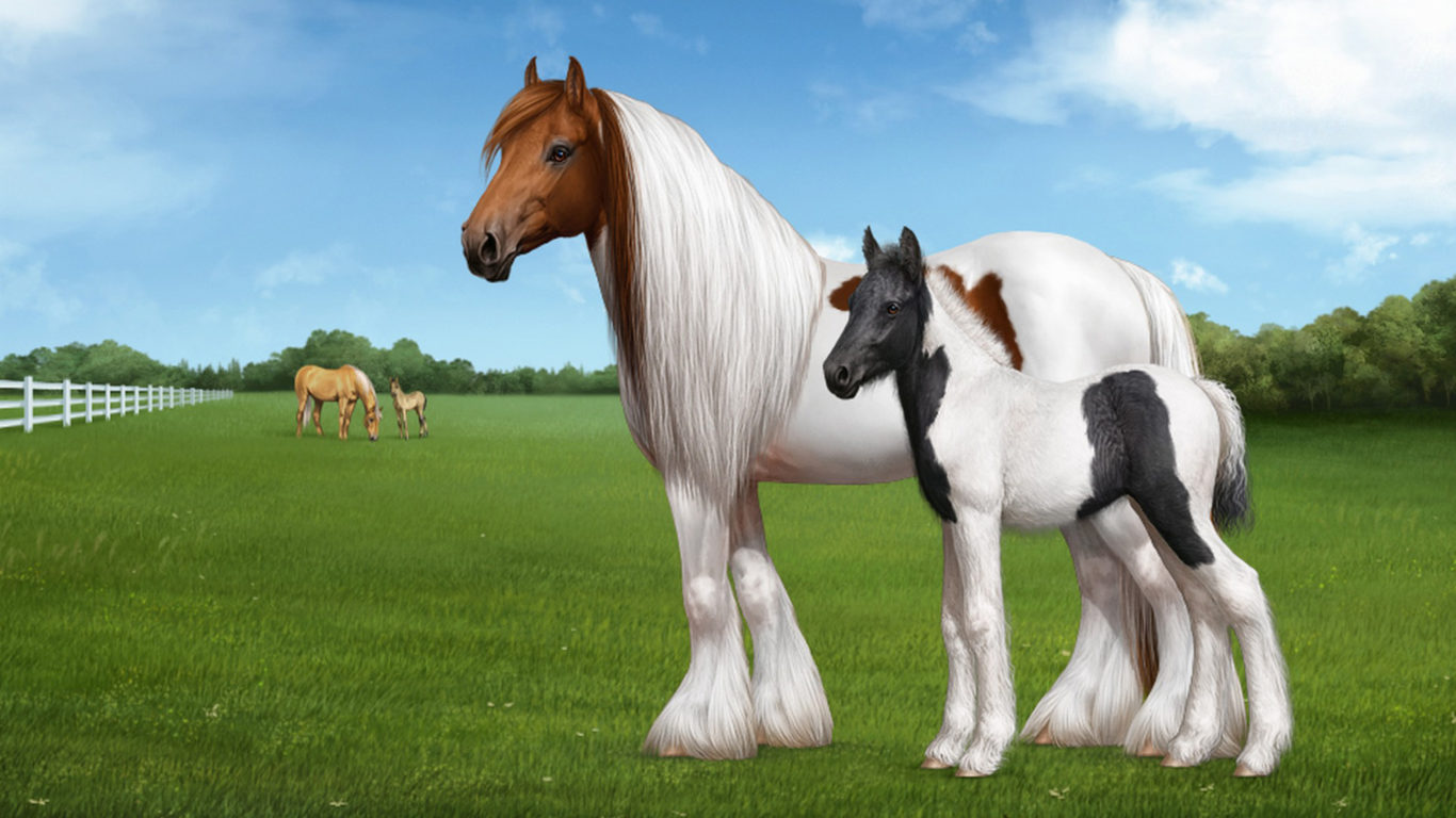 Beautiful Wild Animals Wallpapers Gypsy Cob Horse Or Irish Or Colored Cob Type Or Breed Of