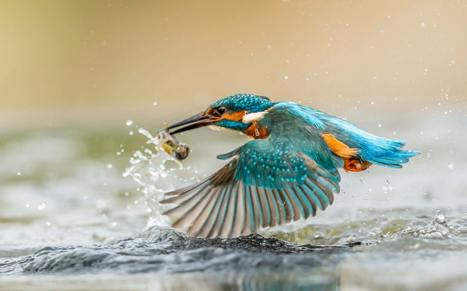 Iphone 5 Wallpaper Dimensions Kingfisher Bird With Caught Fish Desktop Wallpaper Hd