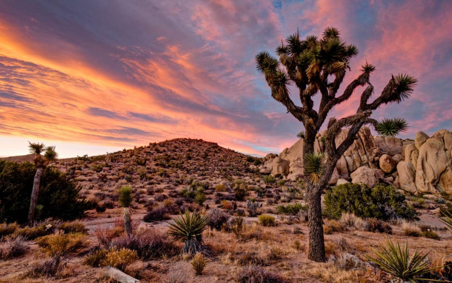 United States Wallpaper Iphone Landscape Wallpaper Hd Joshua Tree National Park In